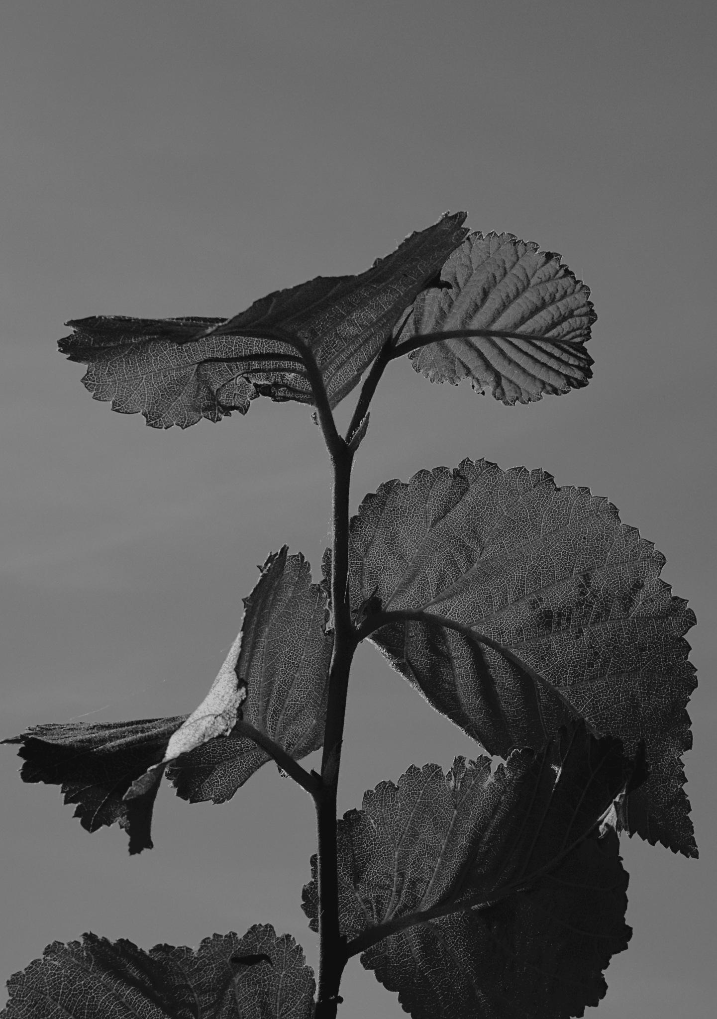 Summer Shoot Silhouette. by Simon Ciappara