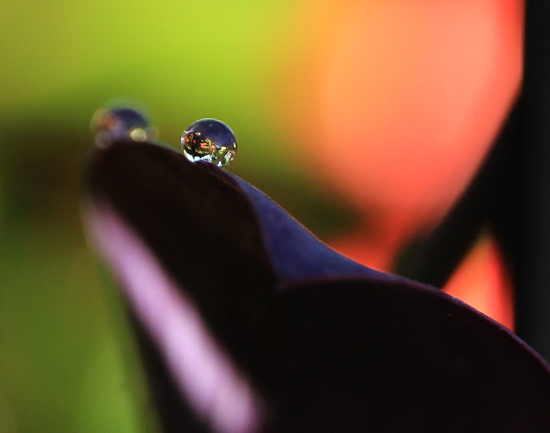 on the edge by doby