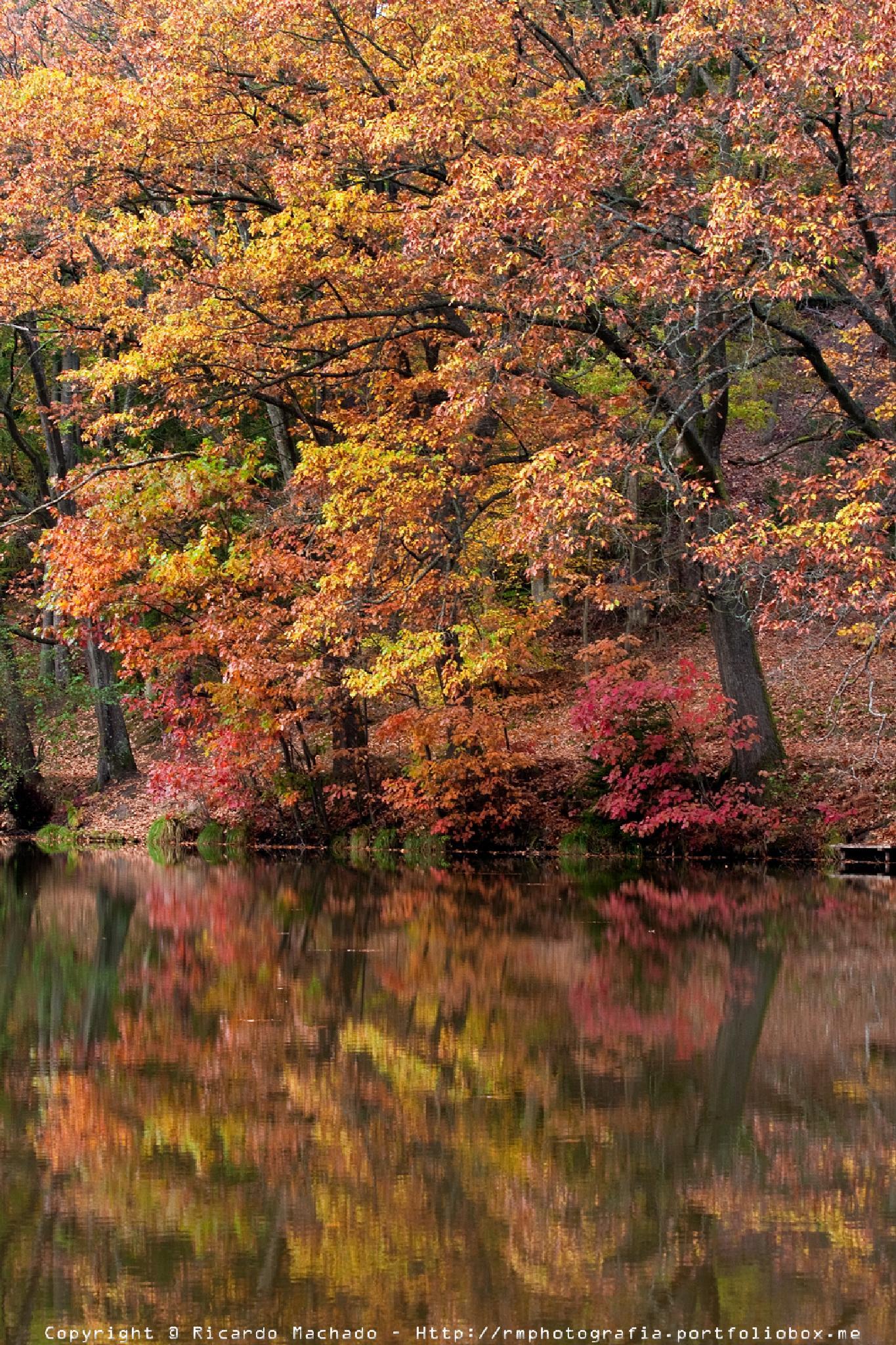 Photo in Landscape #forest #landscape #lake #reflex #autumn #concept #colors #water #trees