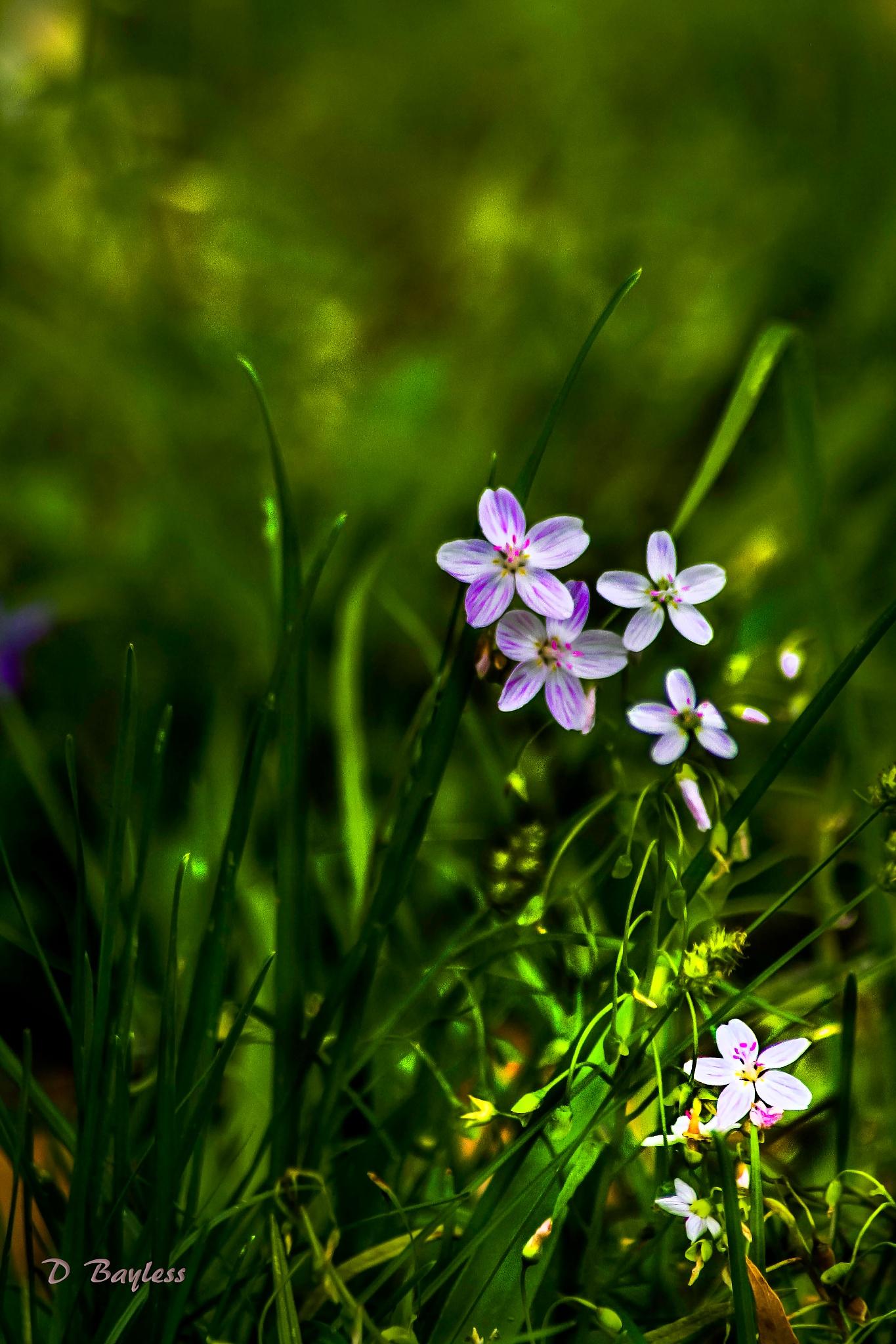Flower Field by DebraBayless