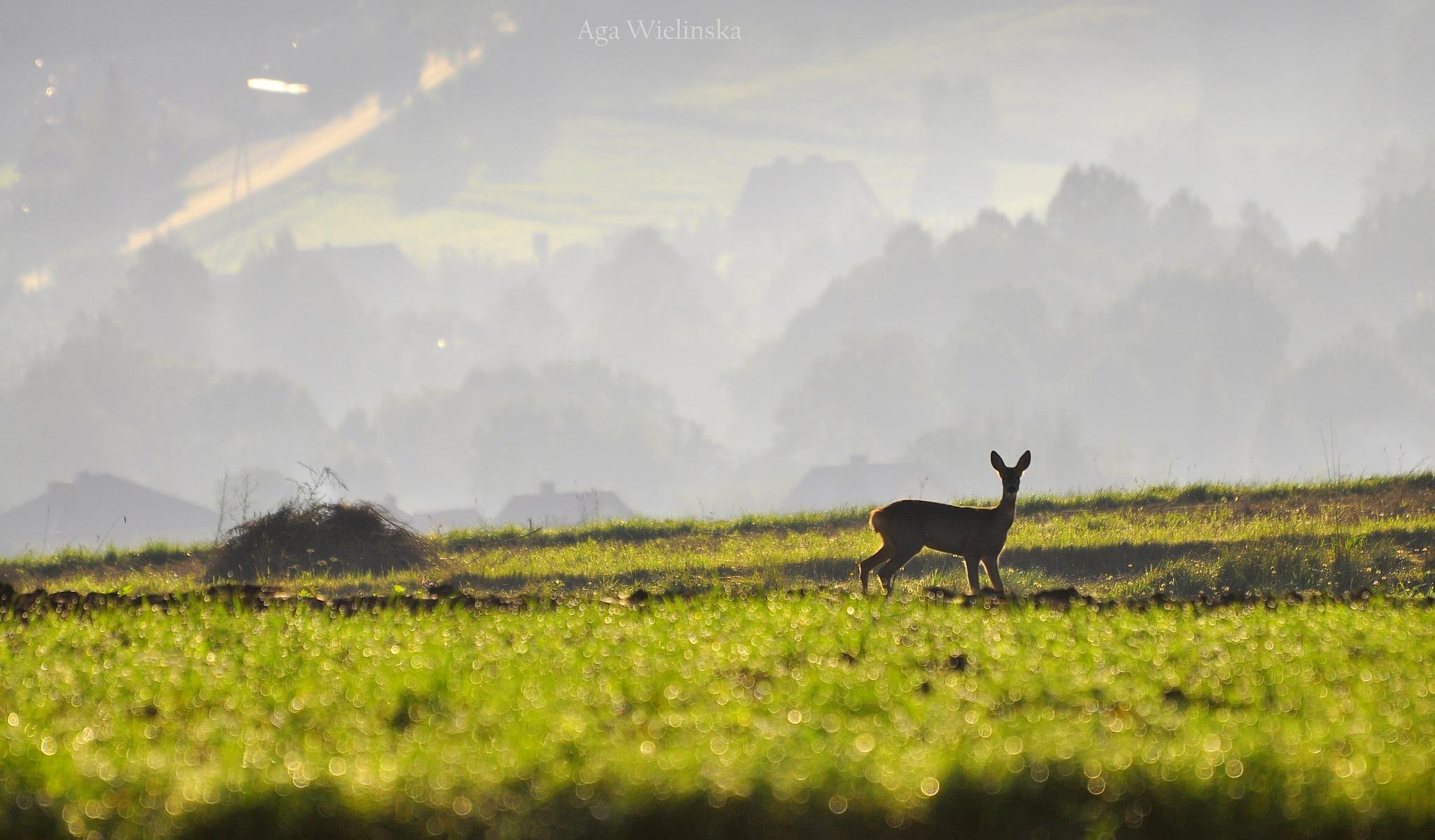 Autumn morning.  by agawielinska