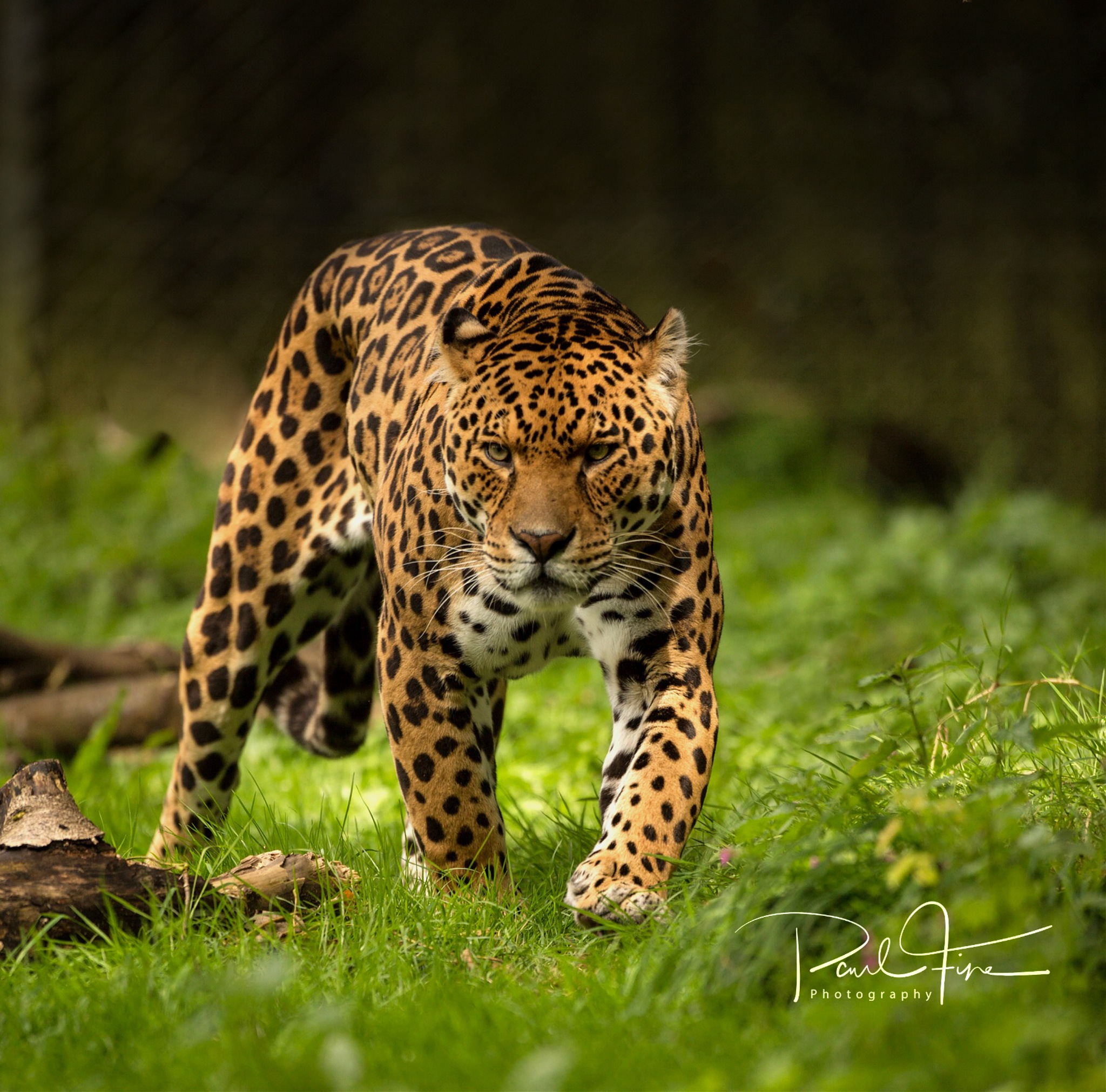 Coming for you..  by PaulFine