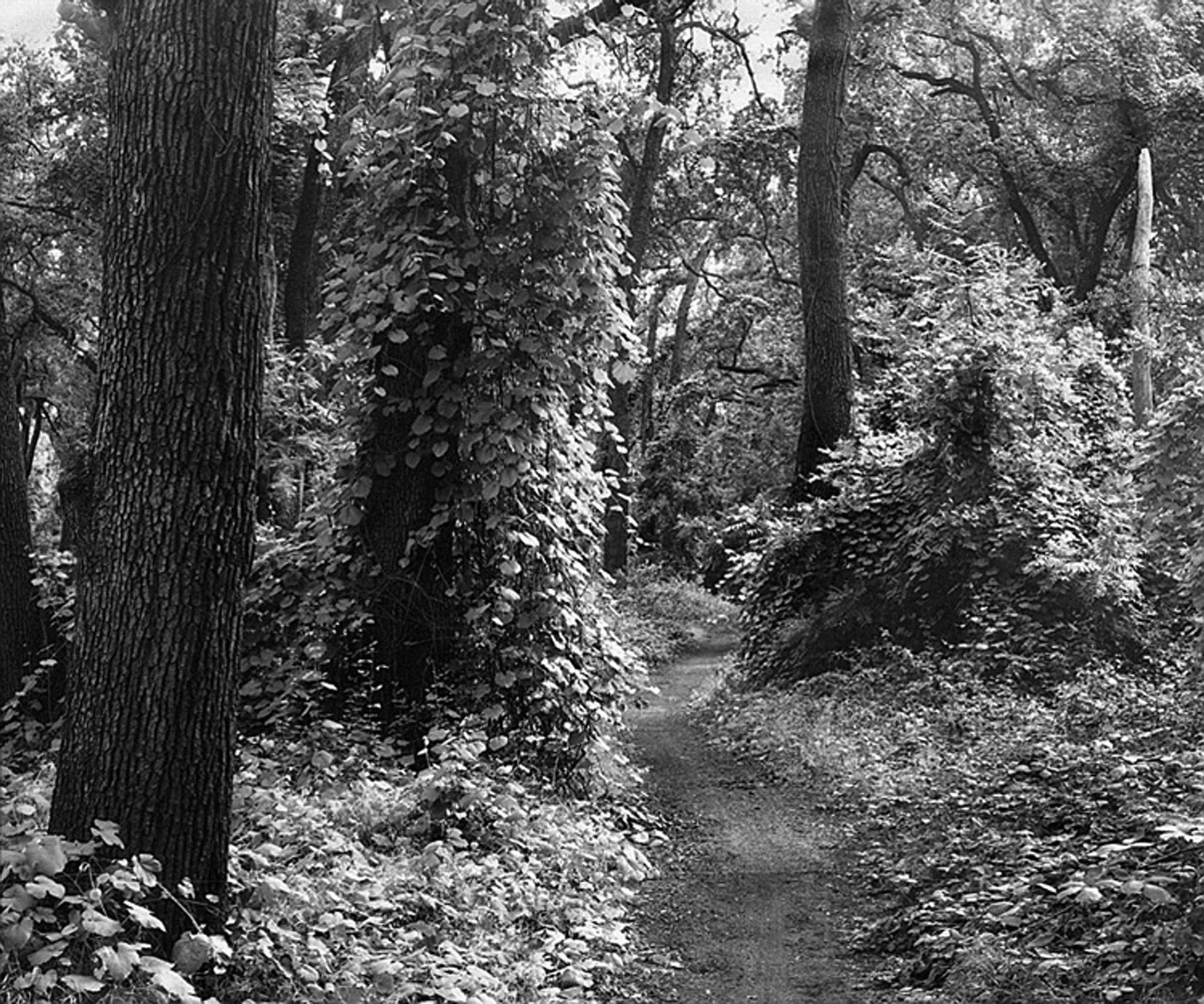 Bidwell Park by Dennis John Begnoche Jr.