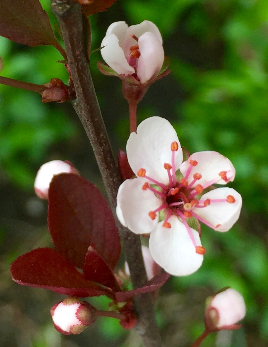 Blossom in Green by Rob Michalowski