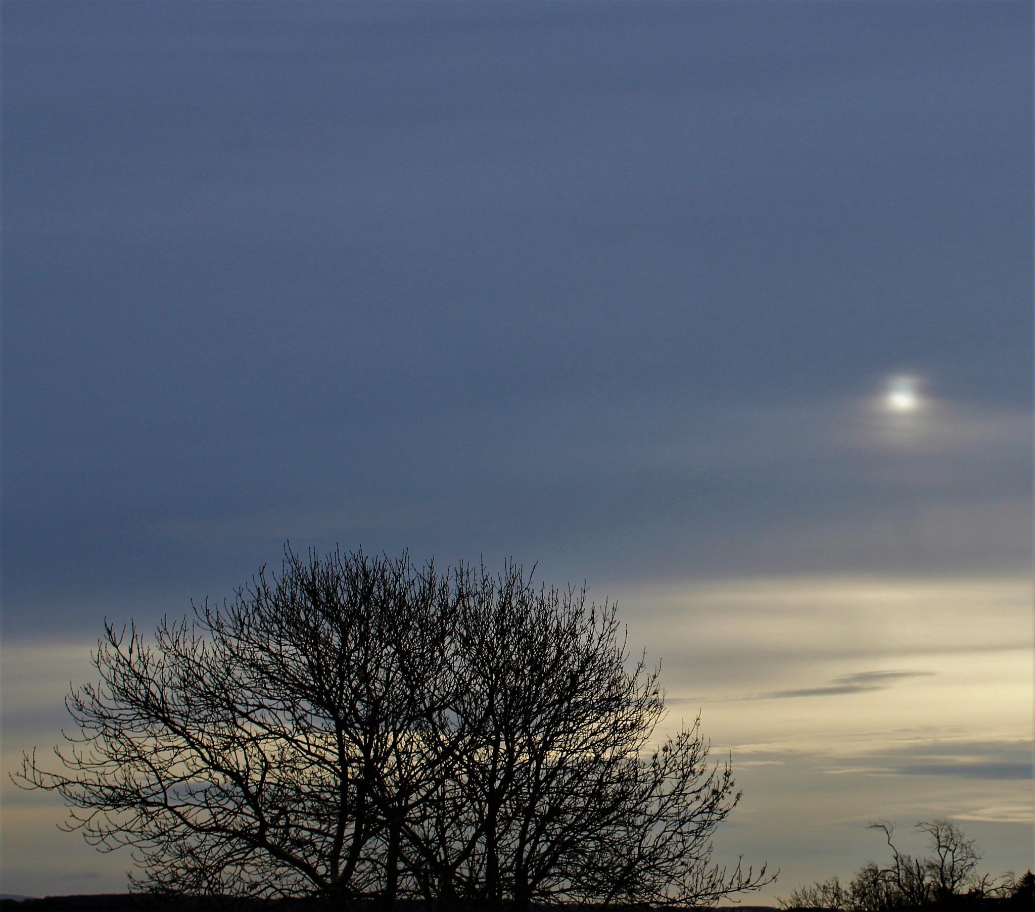 morning light by Elizabeth Hannah