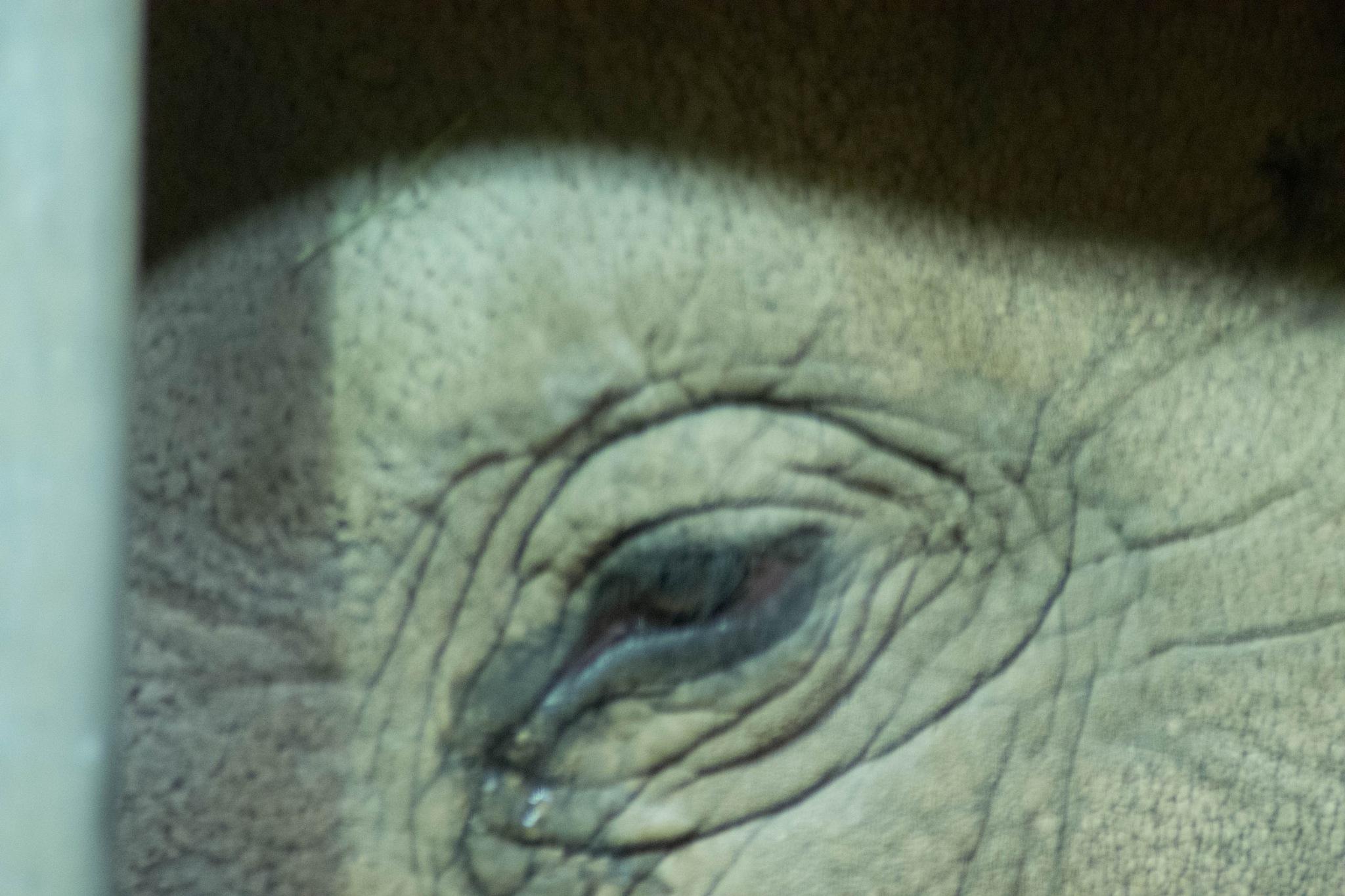 Elephant's Eye by Dan Waters
