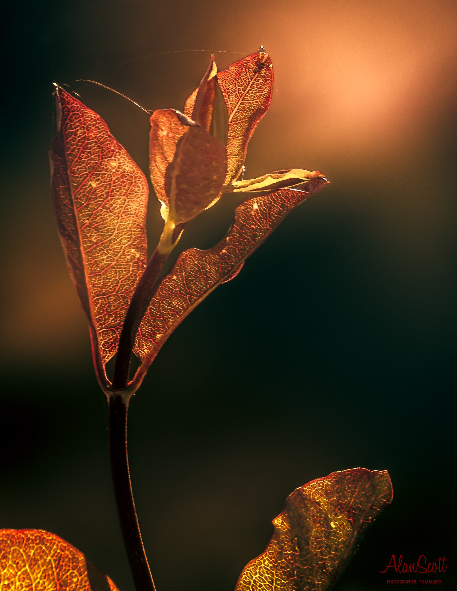 Plant at Sunset by alanscott