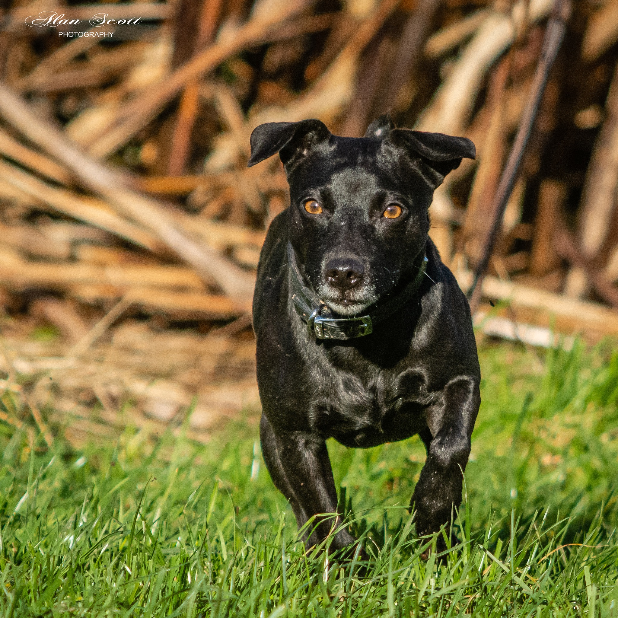 Terrier in the Sun by alanscott