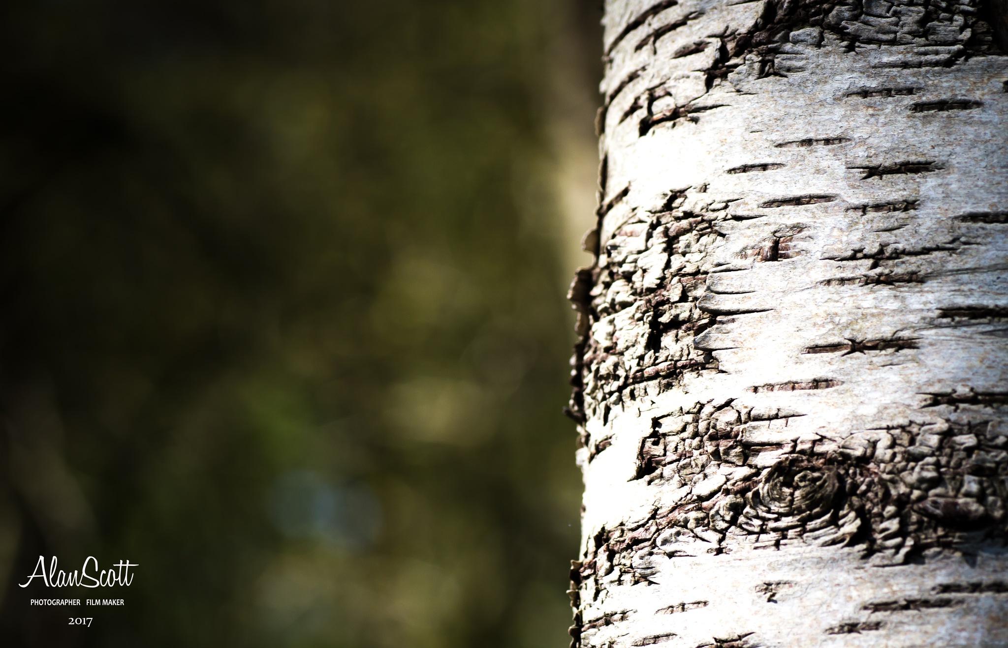 Bark by alanscott