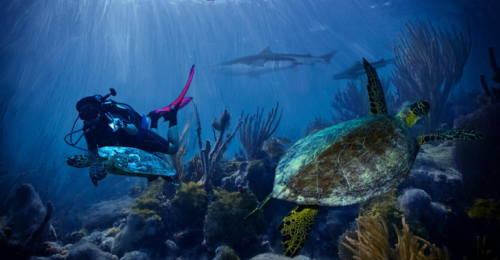 Underwater world  by nurvita dewi