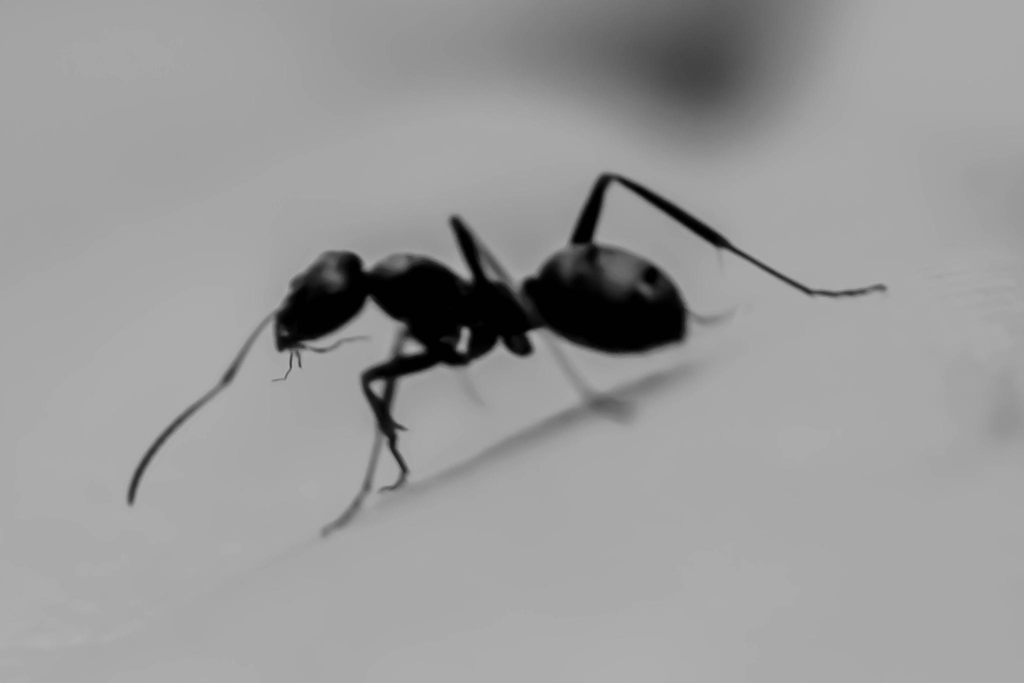 The ant by huyuthuki