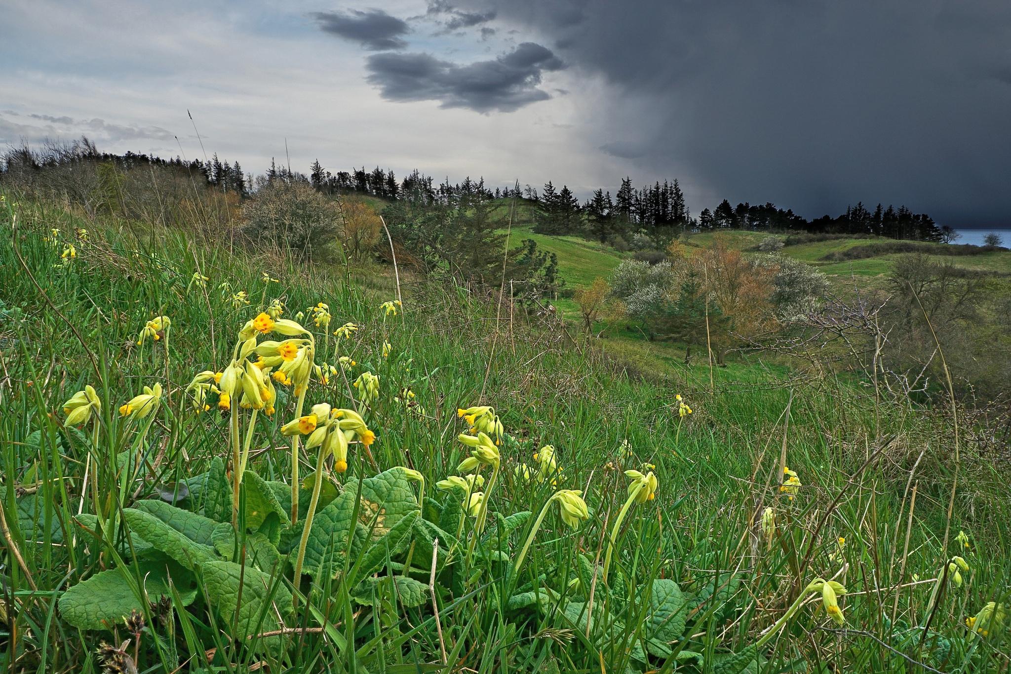 Photo in Landscape #flower #rain #spring