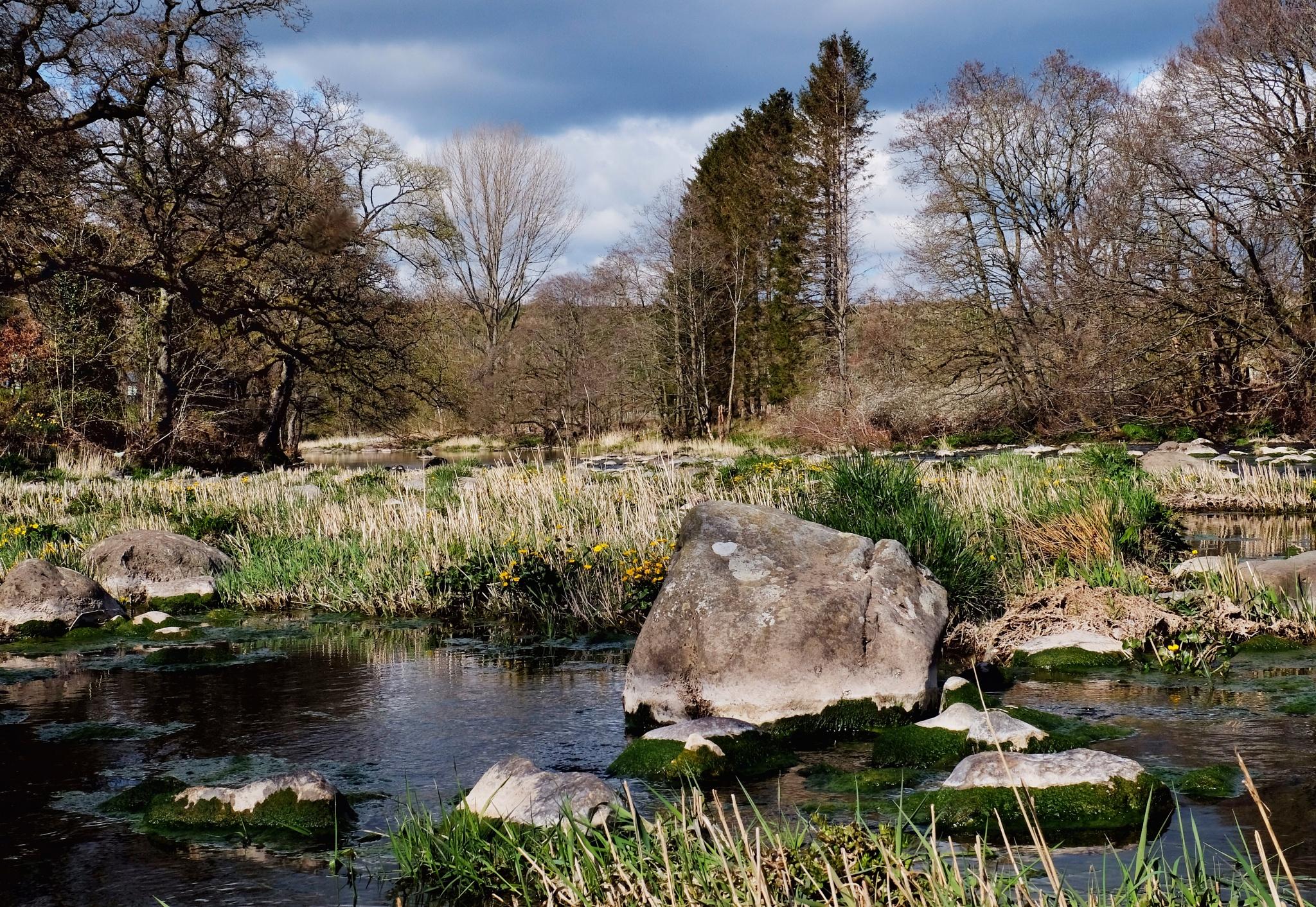 Tales of the Riverbank by Steve Randles