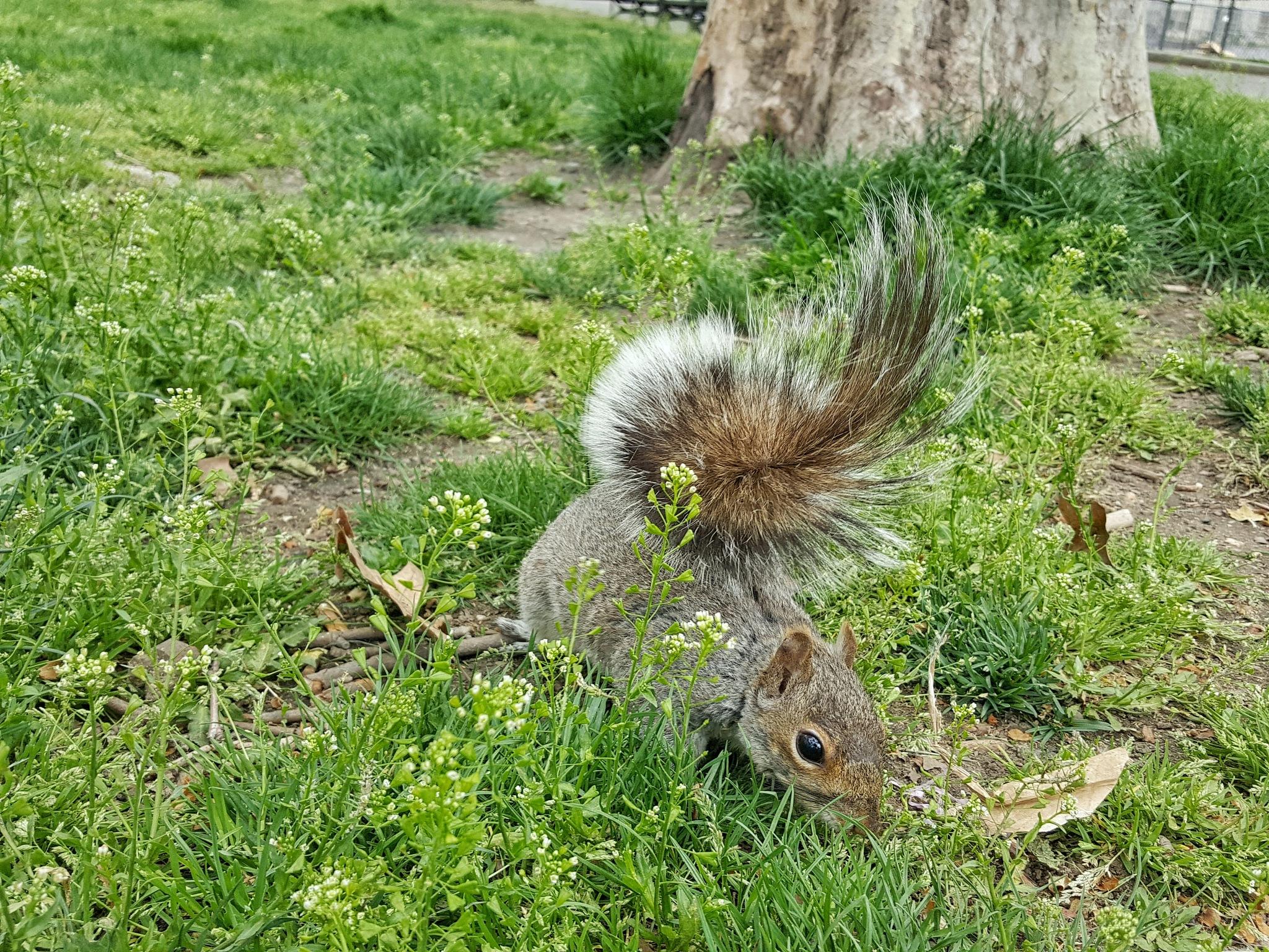 Jacinto the Squirrel by GABRIEL HERNANDEZ