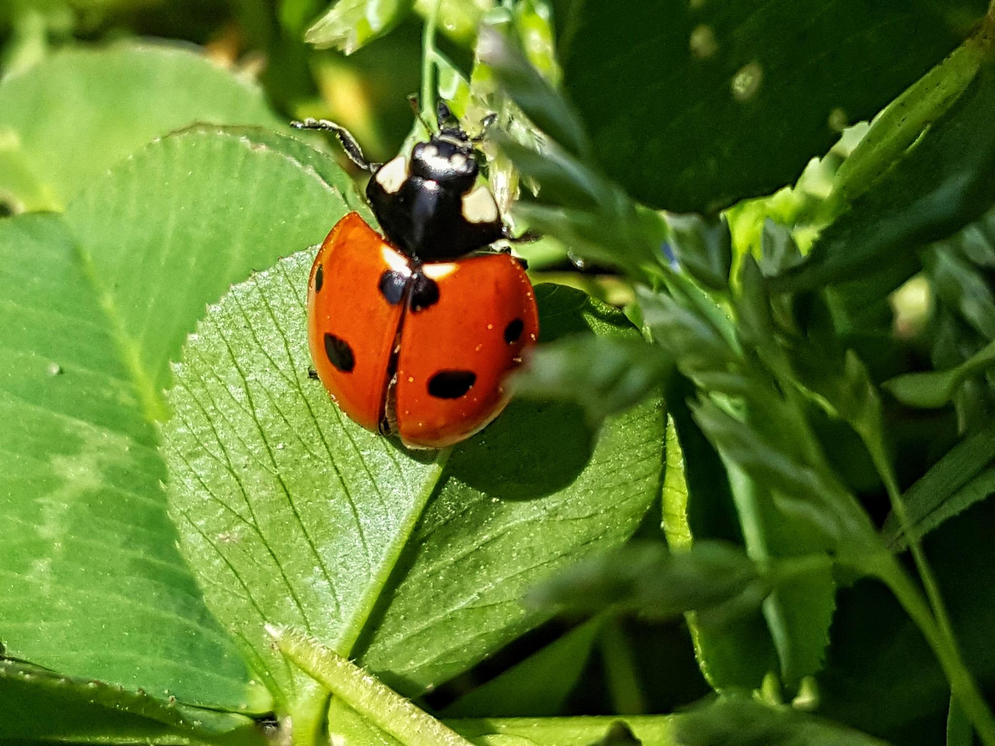Margot the Ladybug by GABRIEL HERNANDEZ