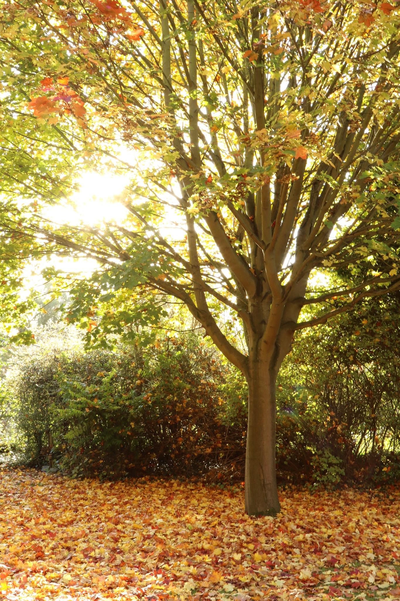 Autumn  by Petehudson