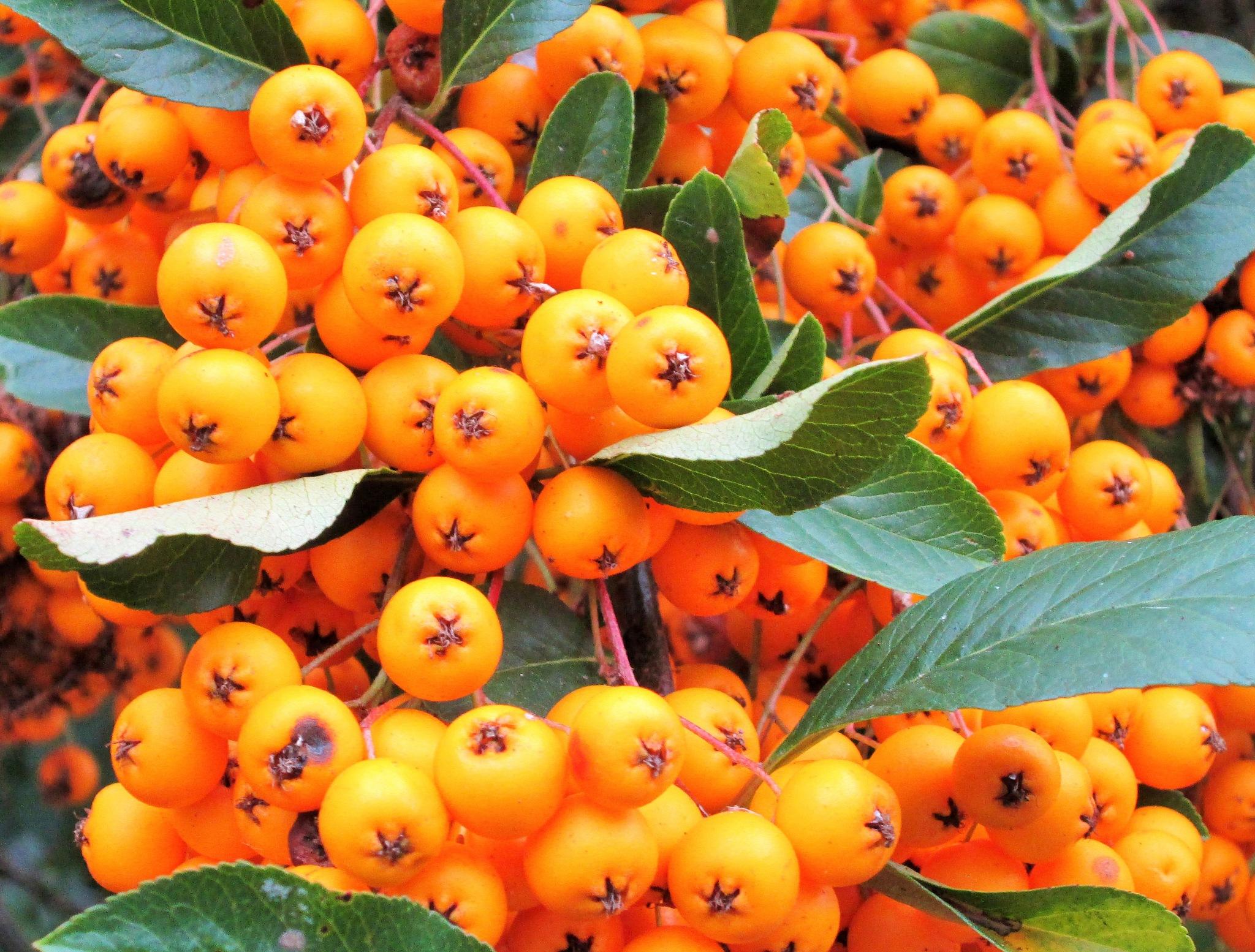Autumn Colours by Michael Lewis