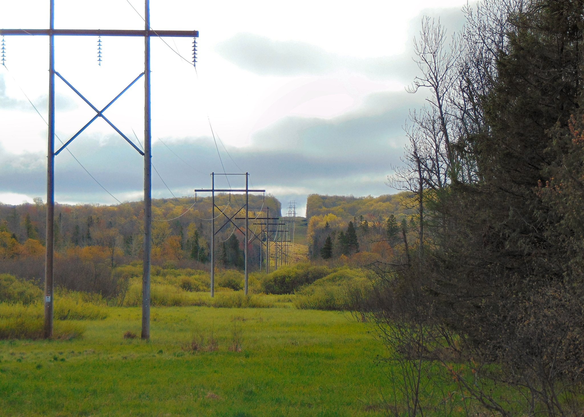 Electric lines and Spring by Nancy Erdmann