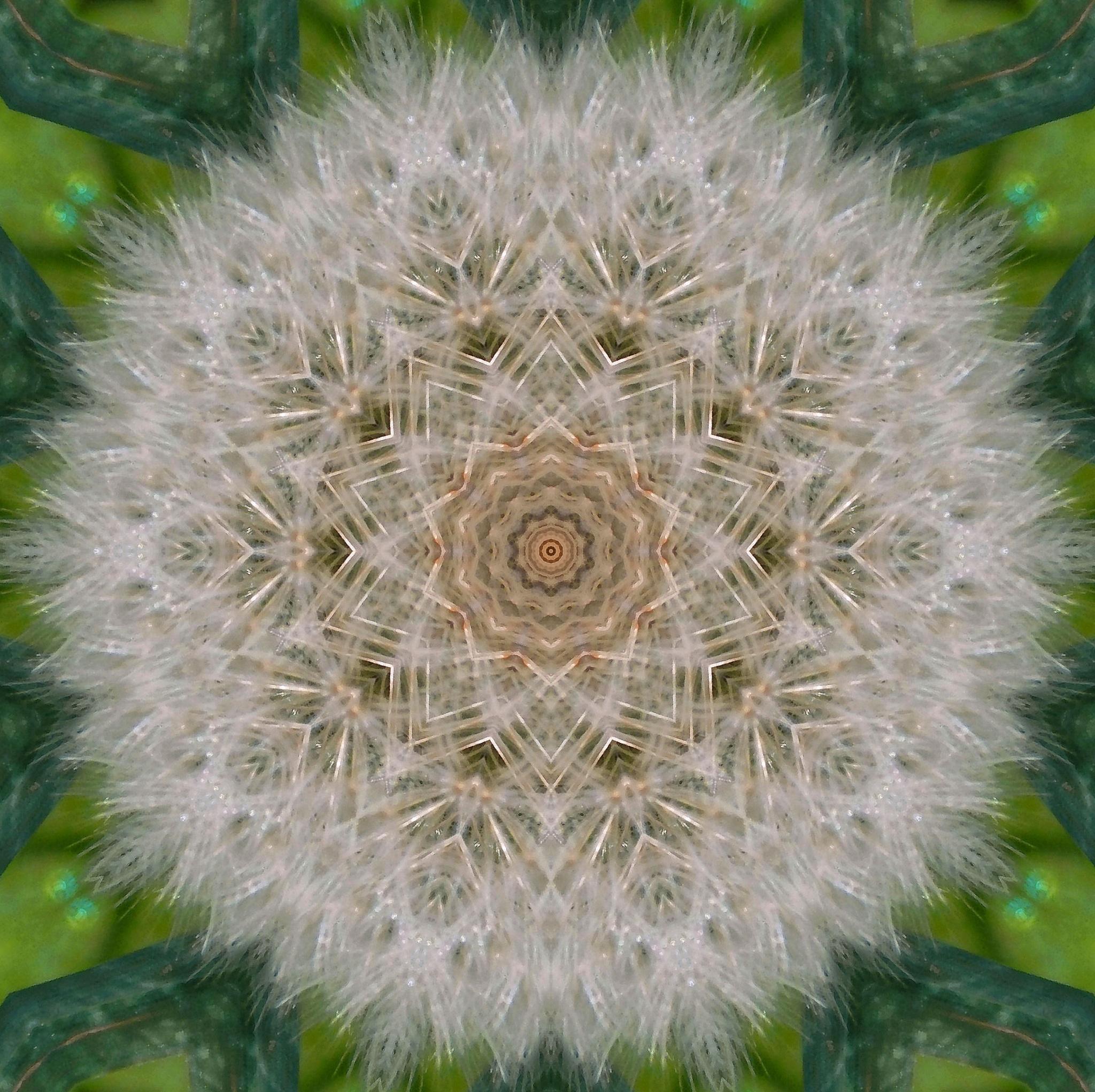 Photo in Fine Art #digital #editing #art #macro #original