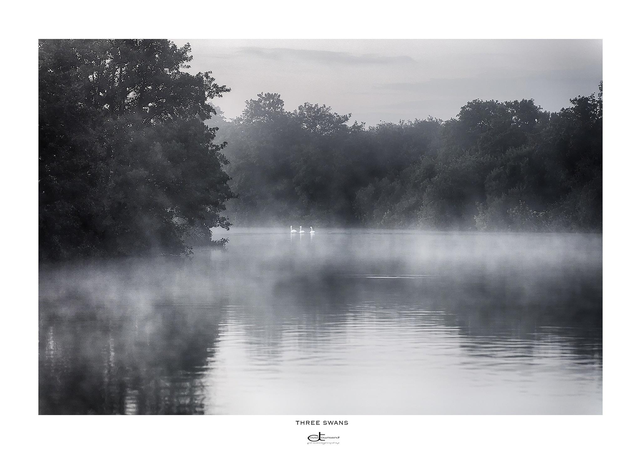 Three swans by David Townsend