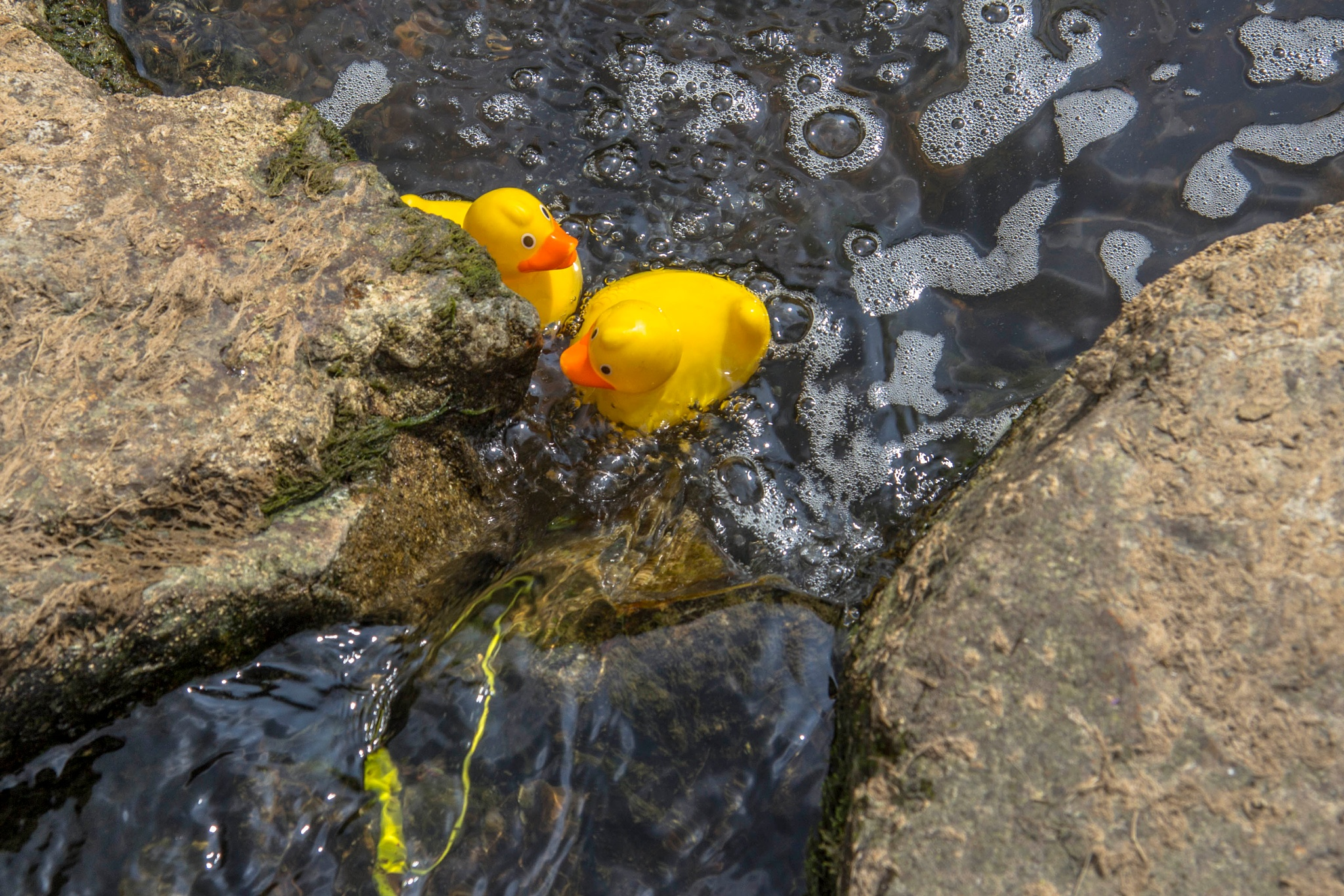Photo in Lomo #duck #hdr #new #water