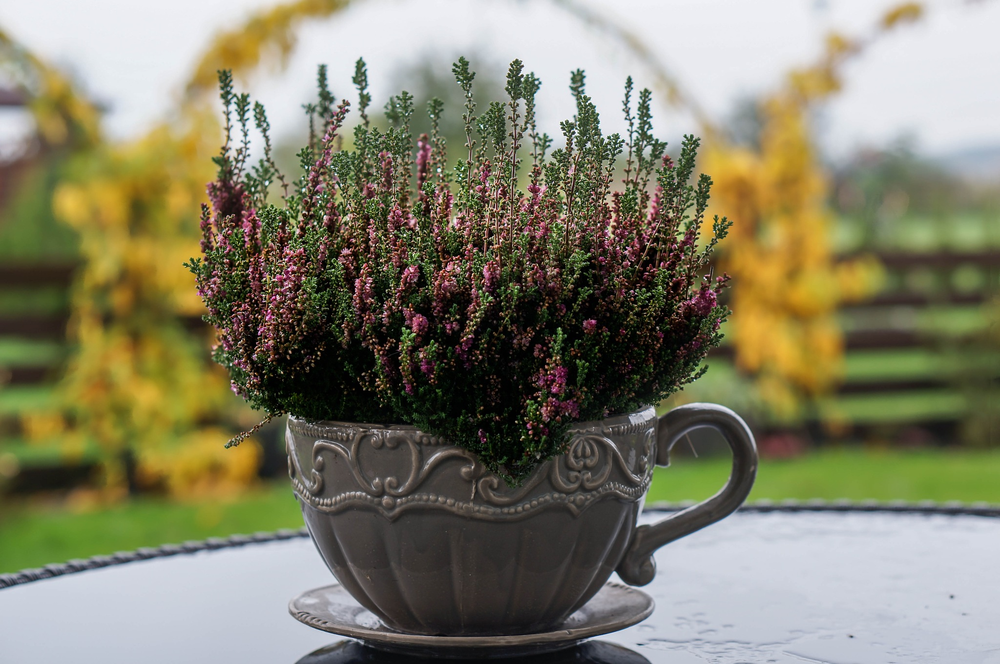 full cup of fall by saigha