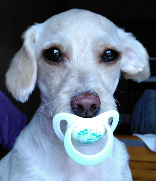 Pacifier  by miriam.moura