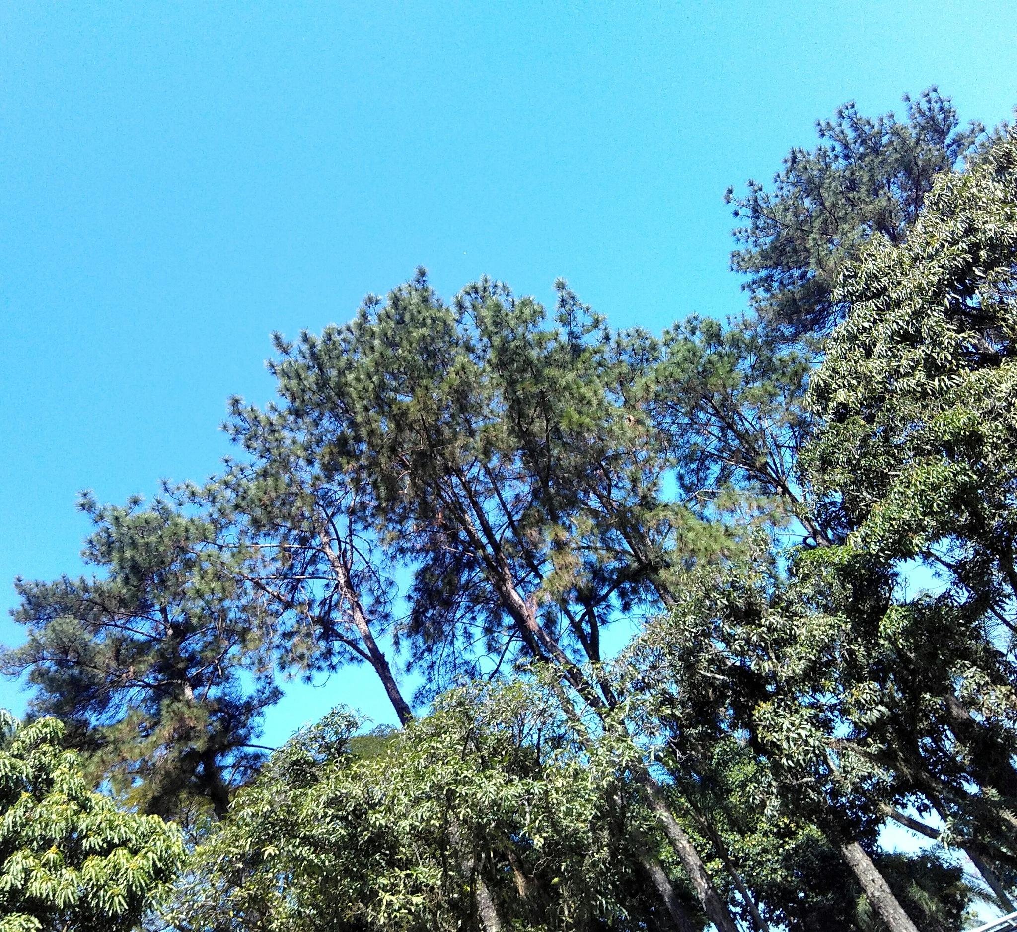 Árvores by miriam.moura