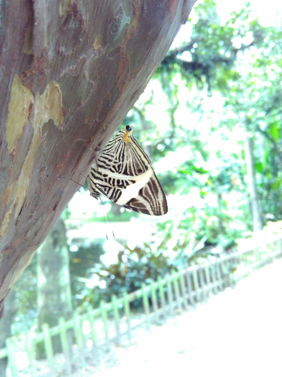 Butterfly  by miriam.moura