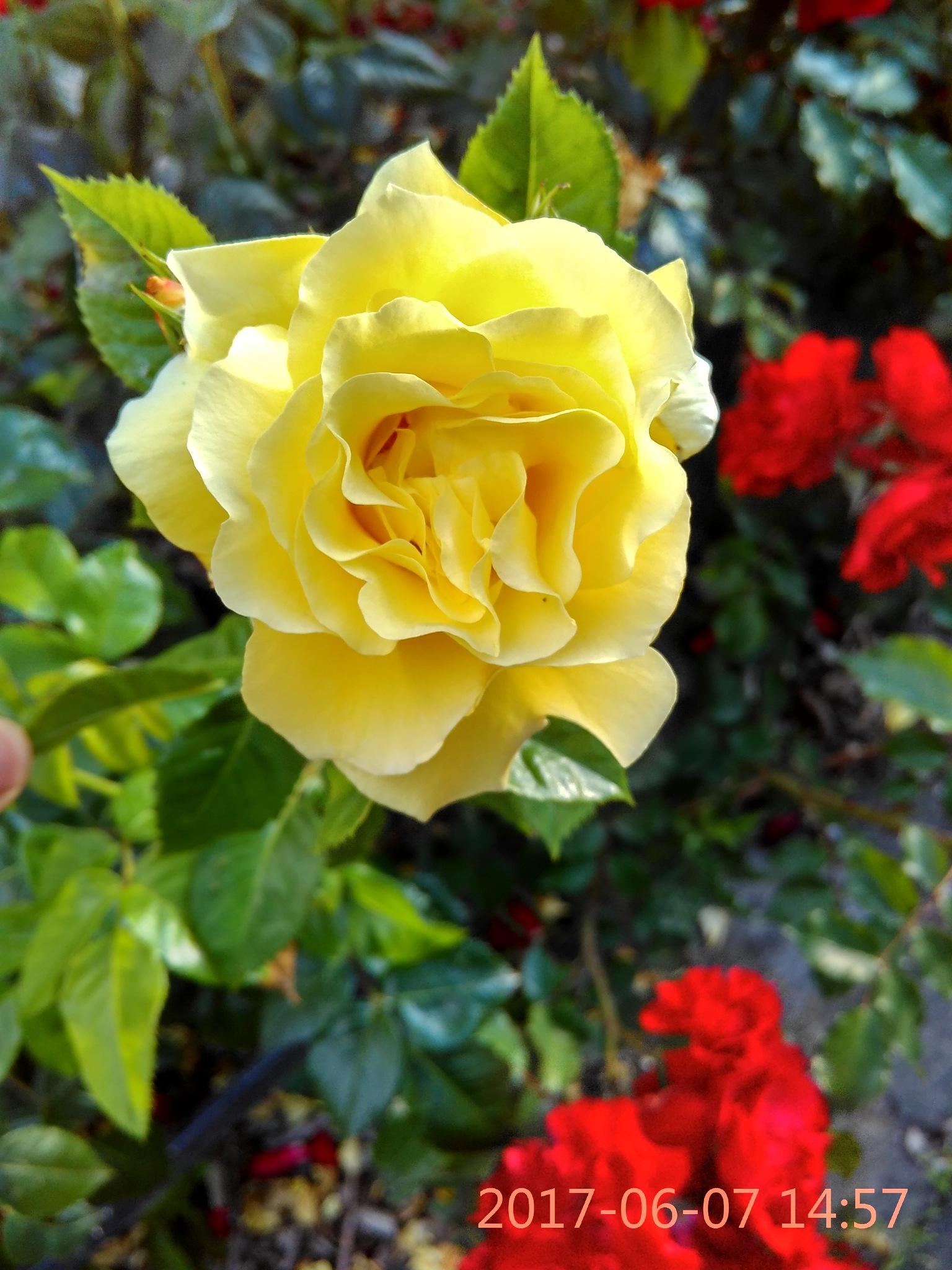 Flower by miriam.moura