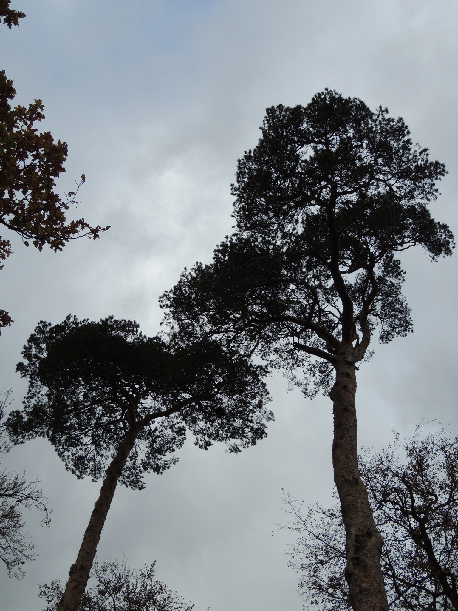 Tall Trees by David Wagner