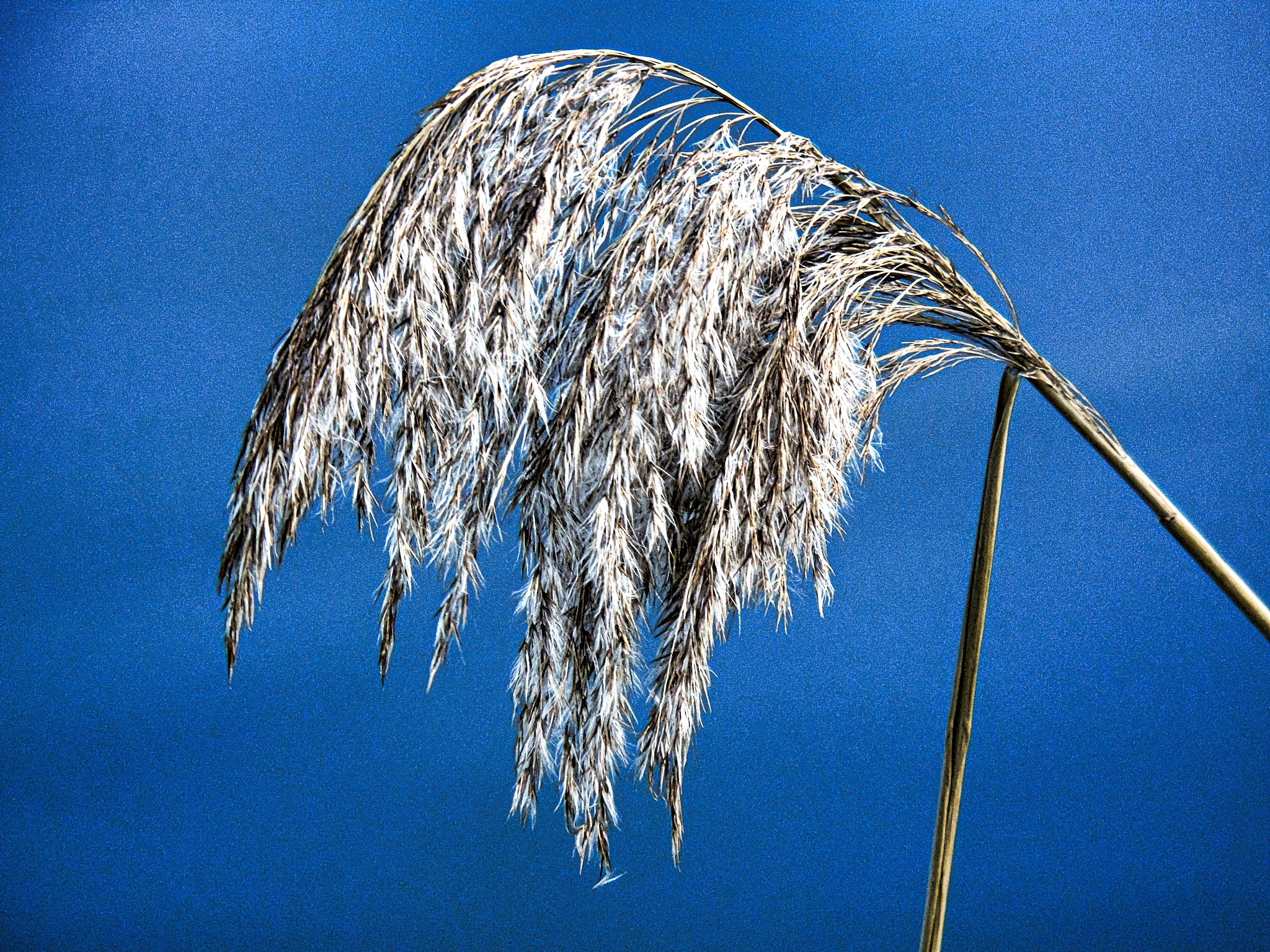 Natures Feather duster by David Wagner