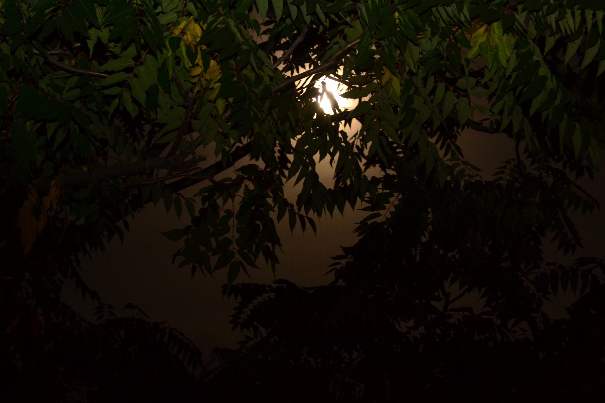 Moon thru the trees. by Smitty1960