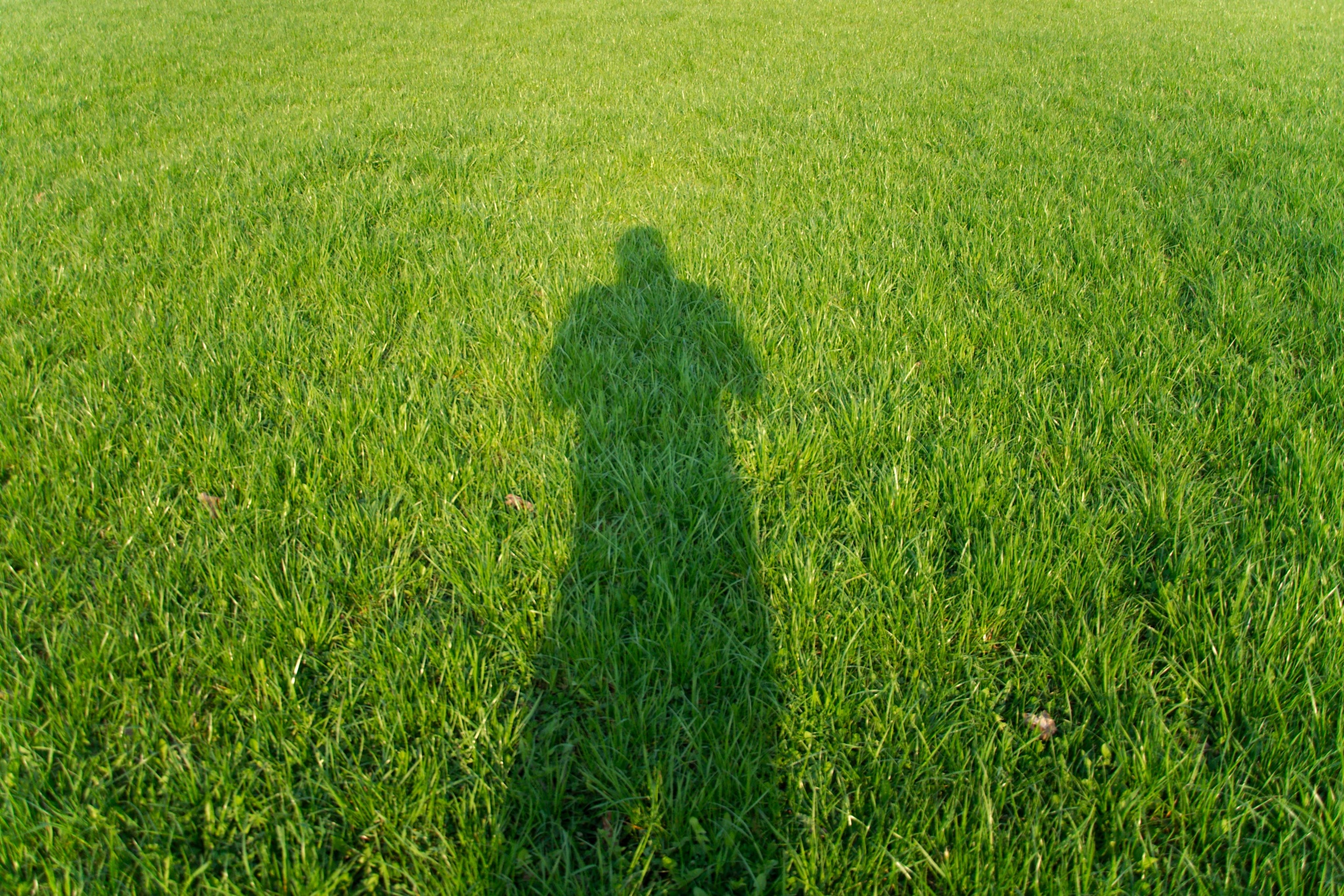 fresh grass by Tomtom79