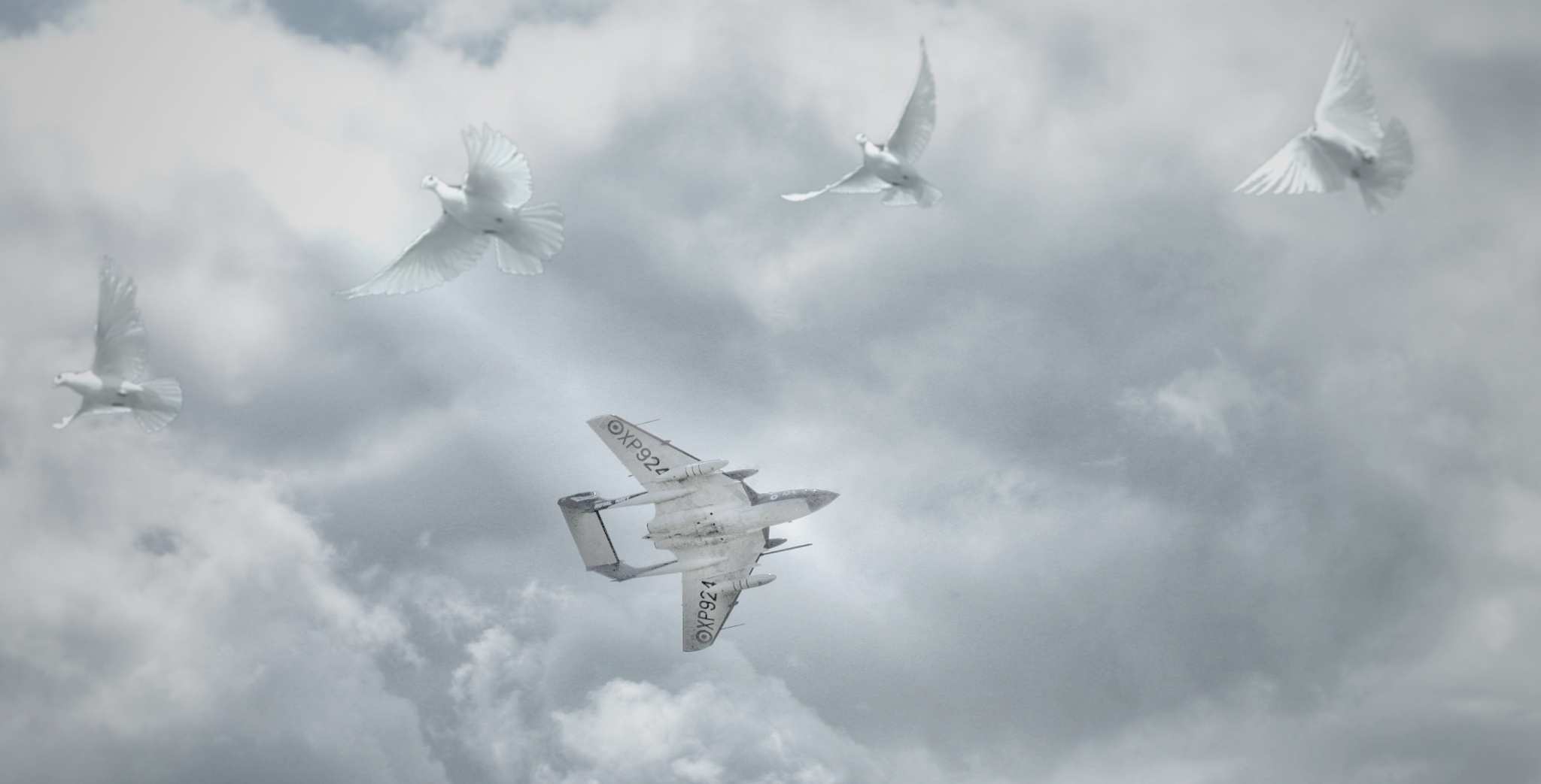 Flight by ricardo1