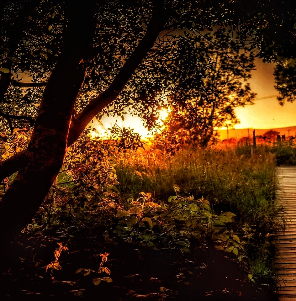 Day's End by ricardo1