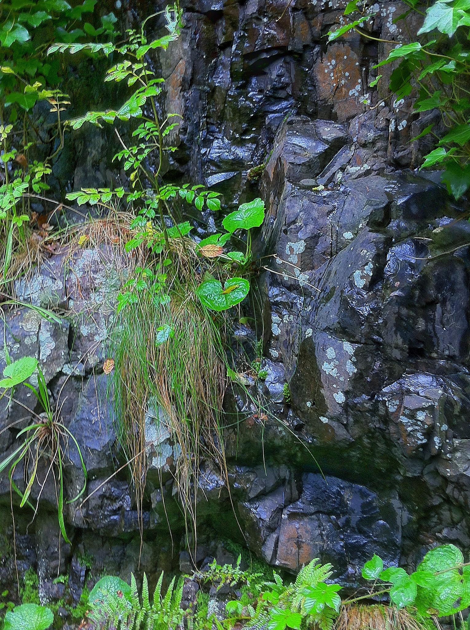 Scottish Granite by ricardo1