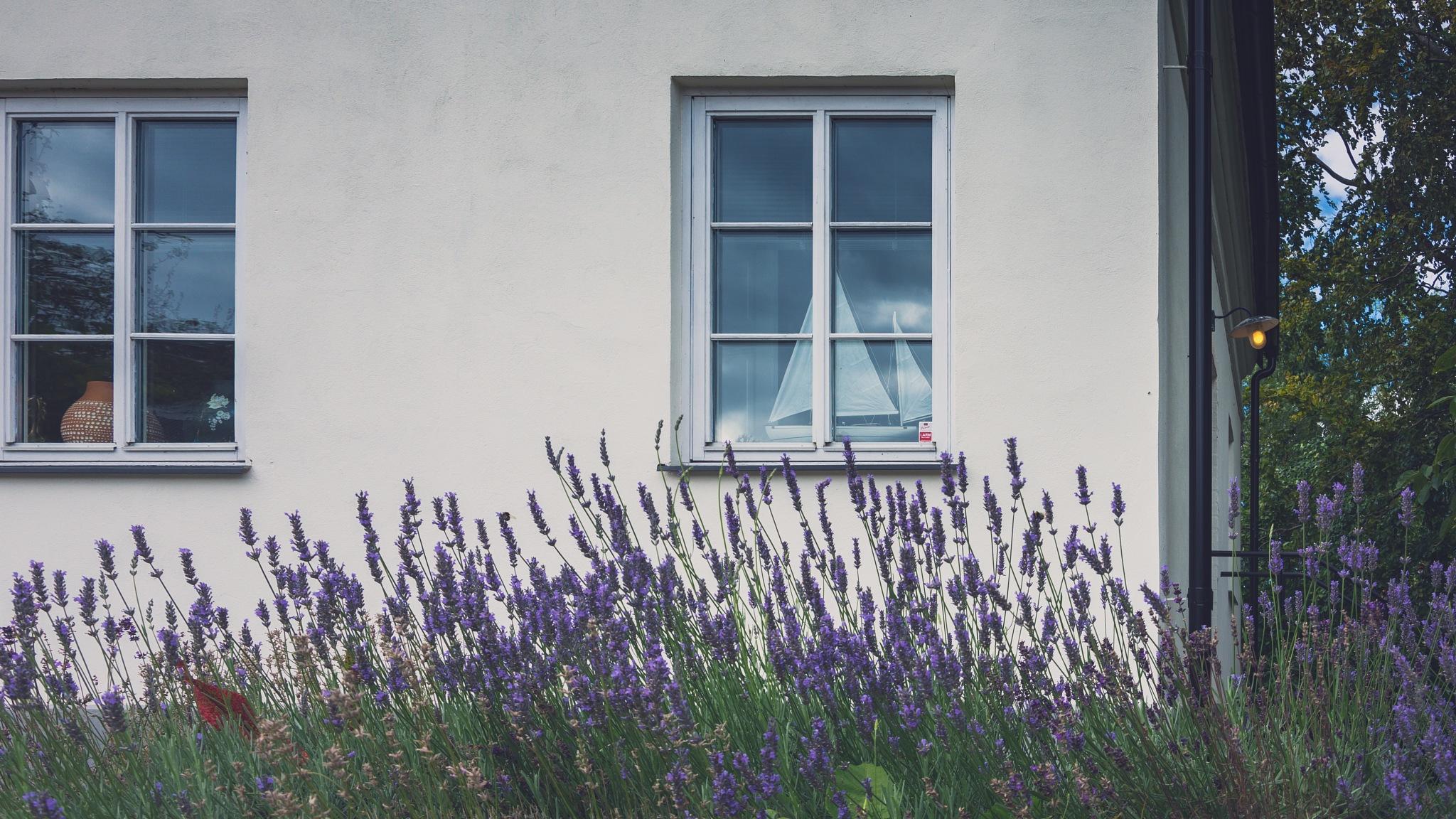 Scandinavian Lavender  by Awende