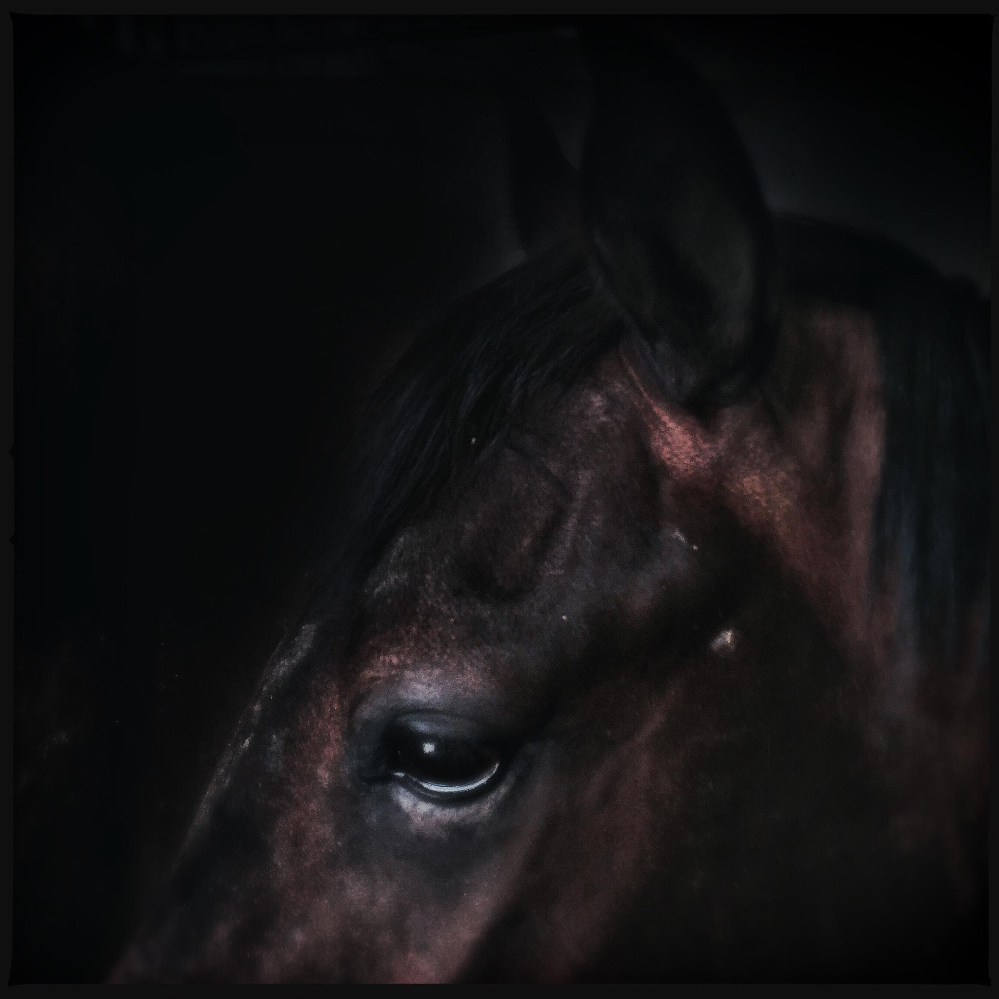 Horse by Silvano Pupella