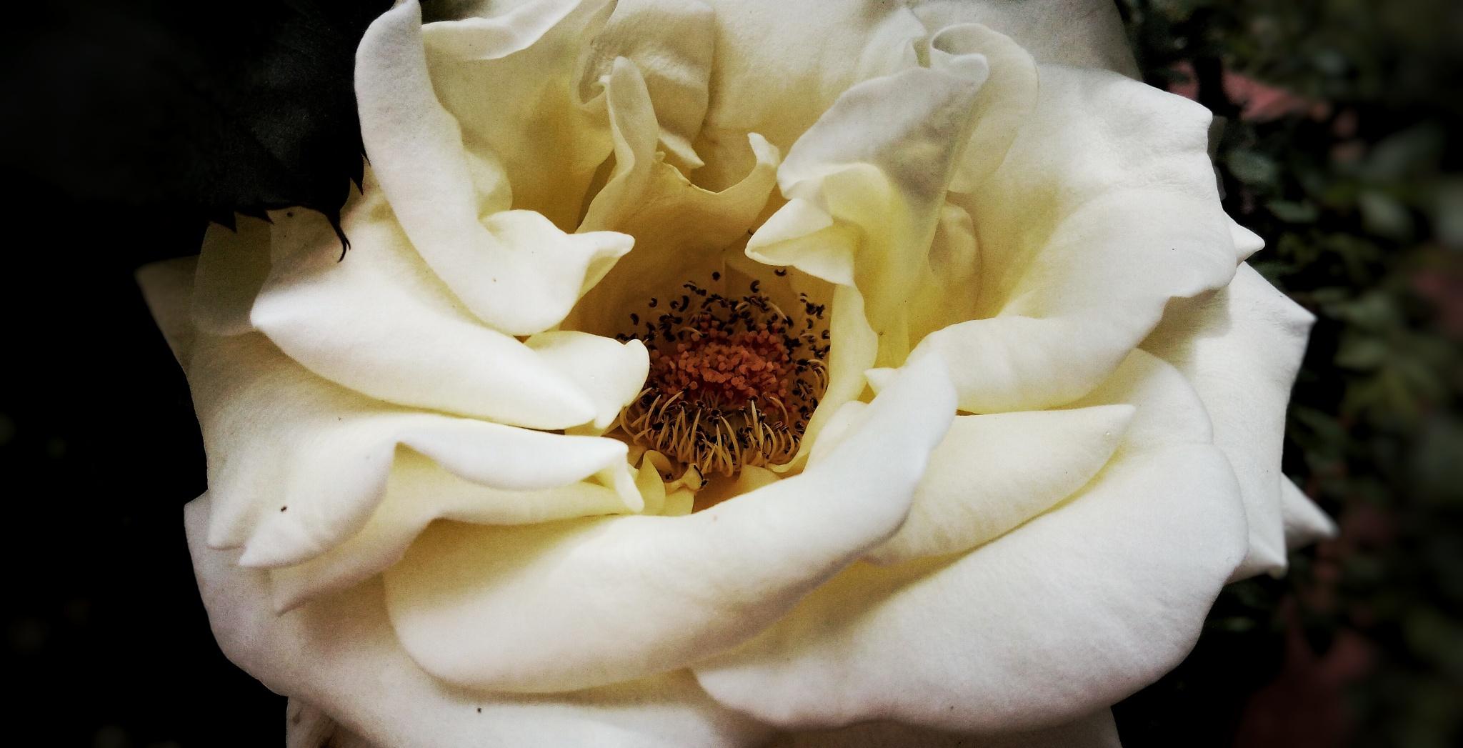 Photo in Macro #flower #macro #nature #flora