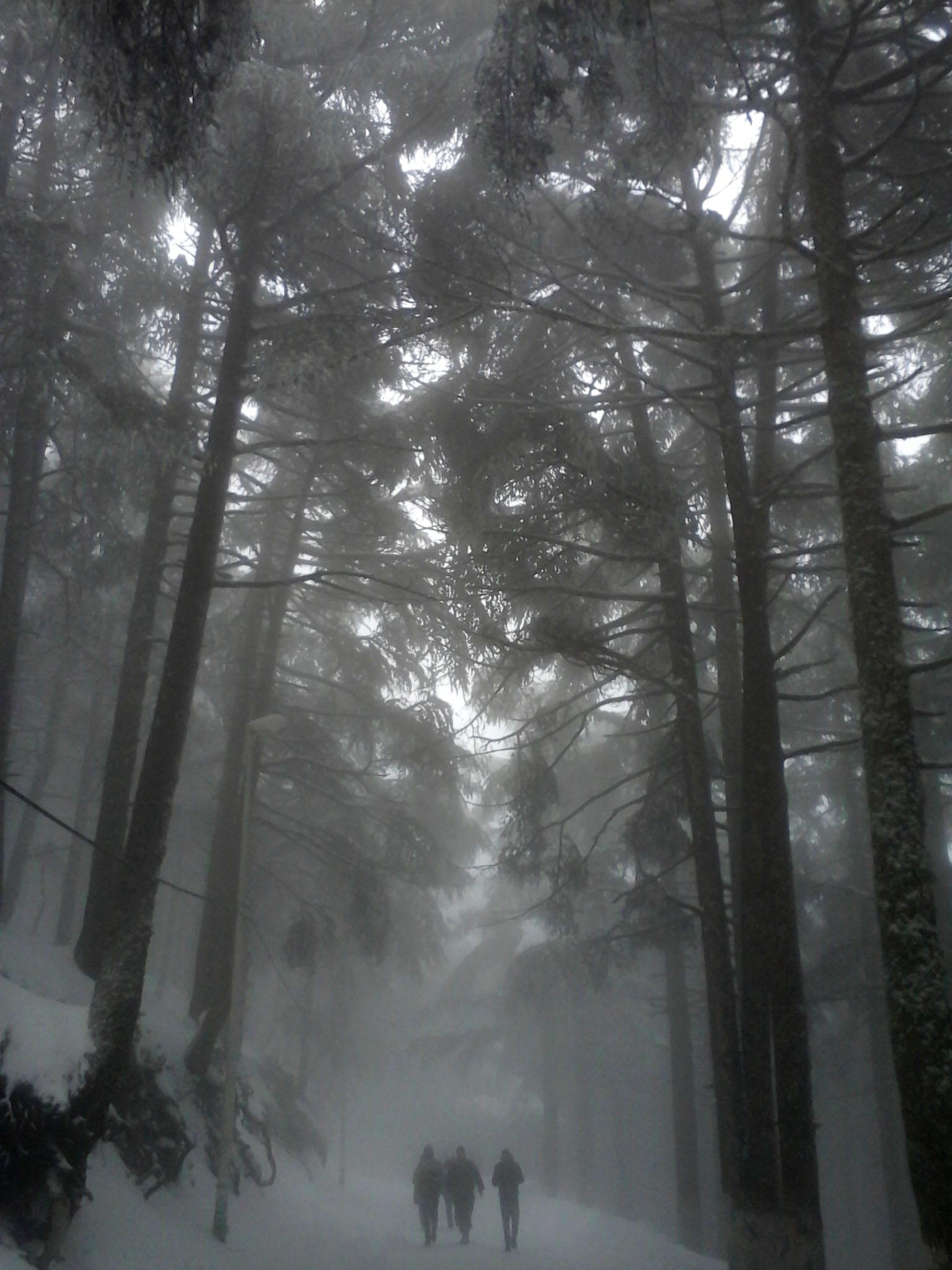 In full fog by madounfaridm
