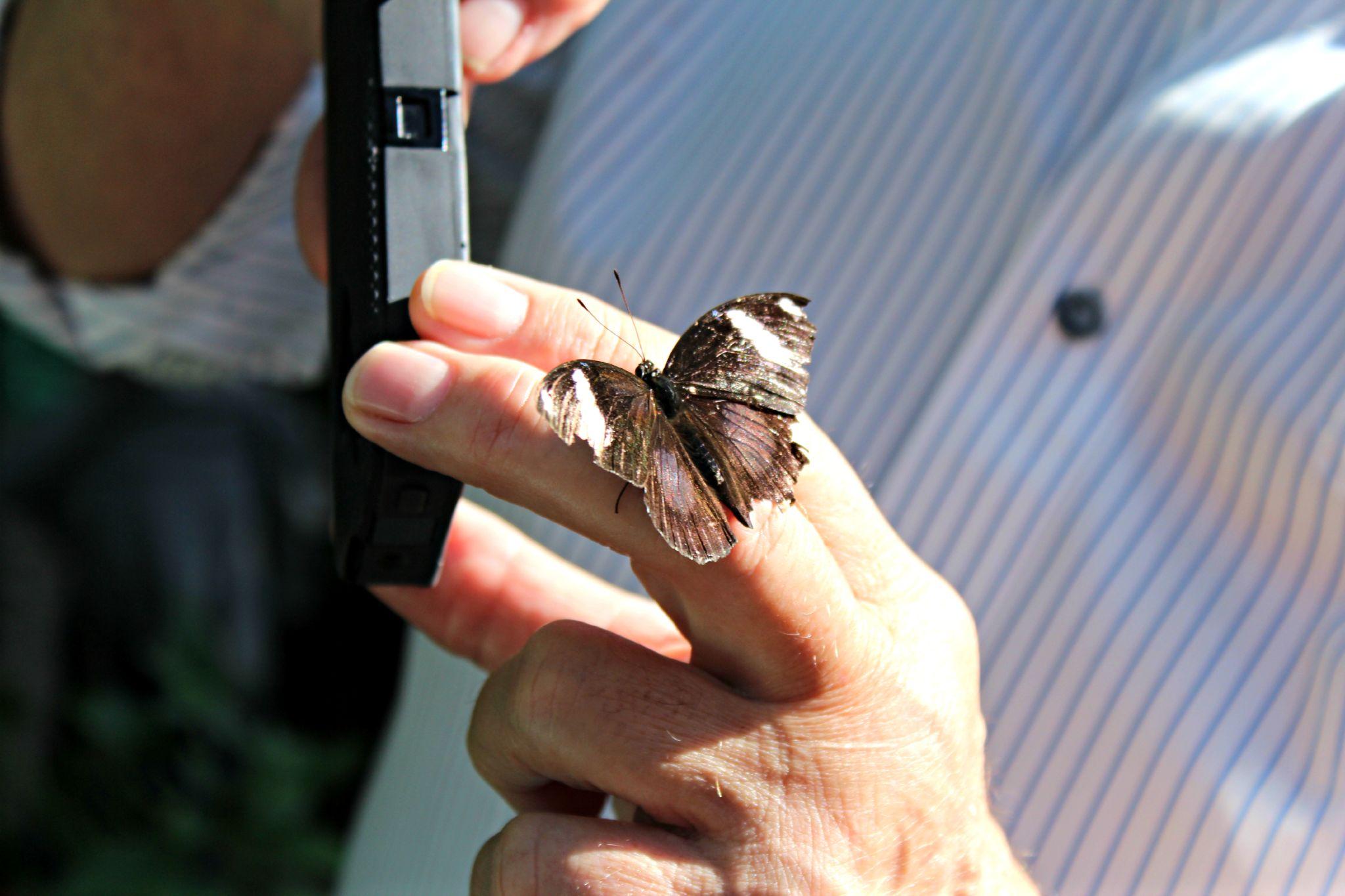 Friendly Butterfly by Dee Morales