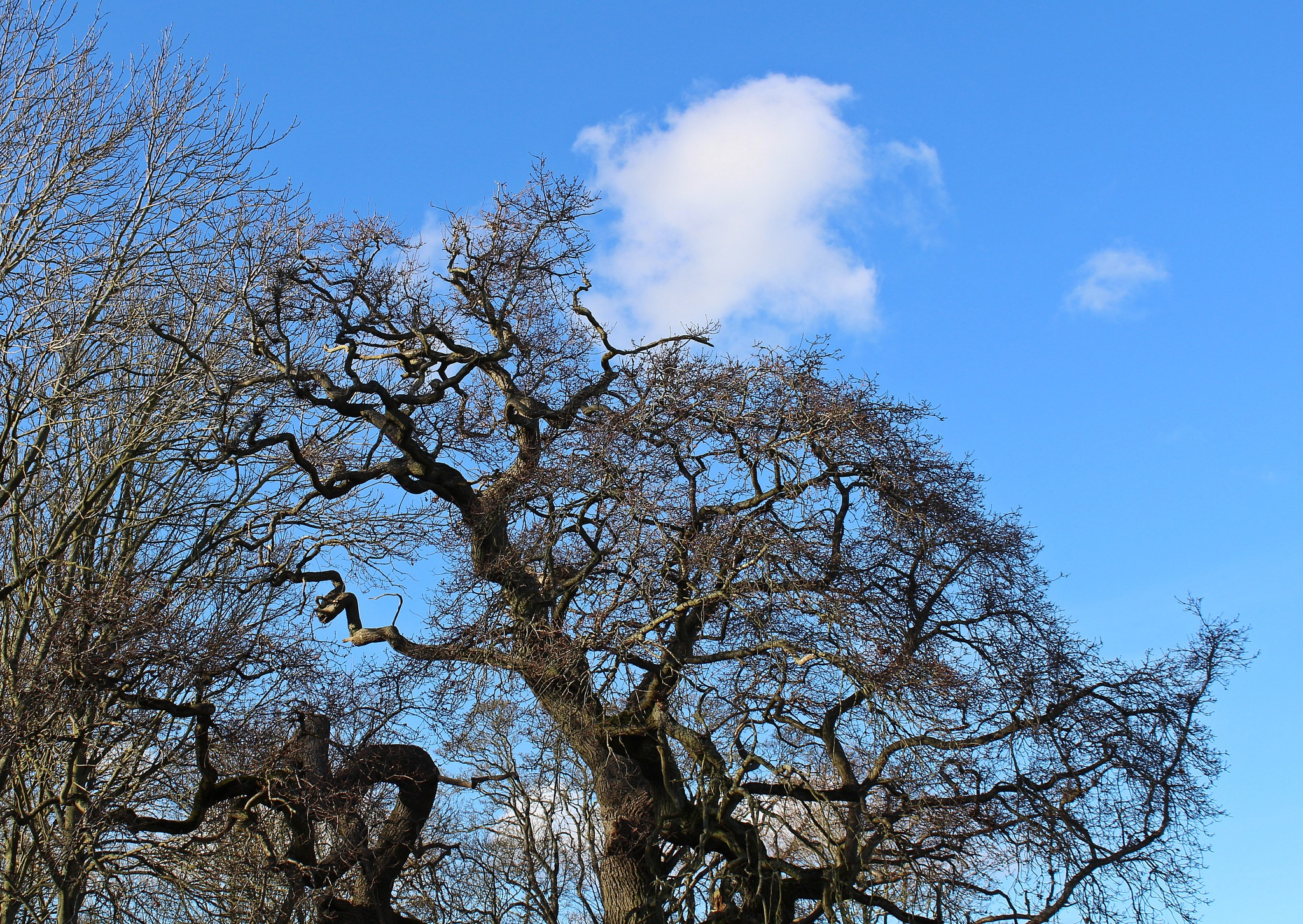 blue sky and a white cloud by Jane Rue
