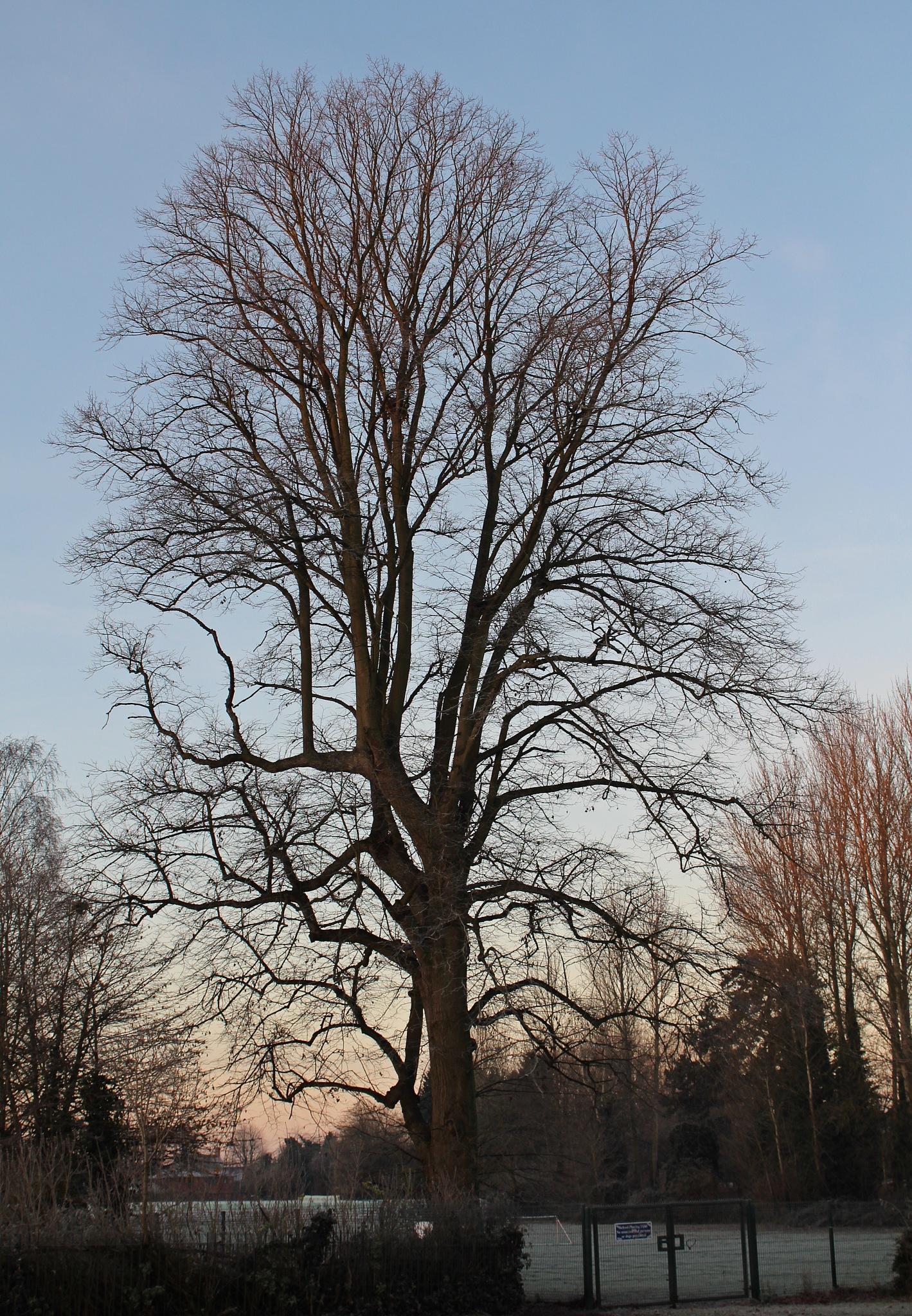 Majesty on a cold morning by Jane Rue