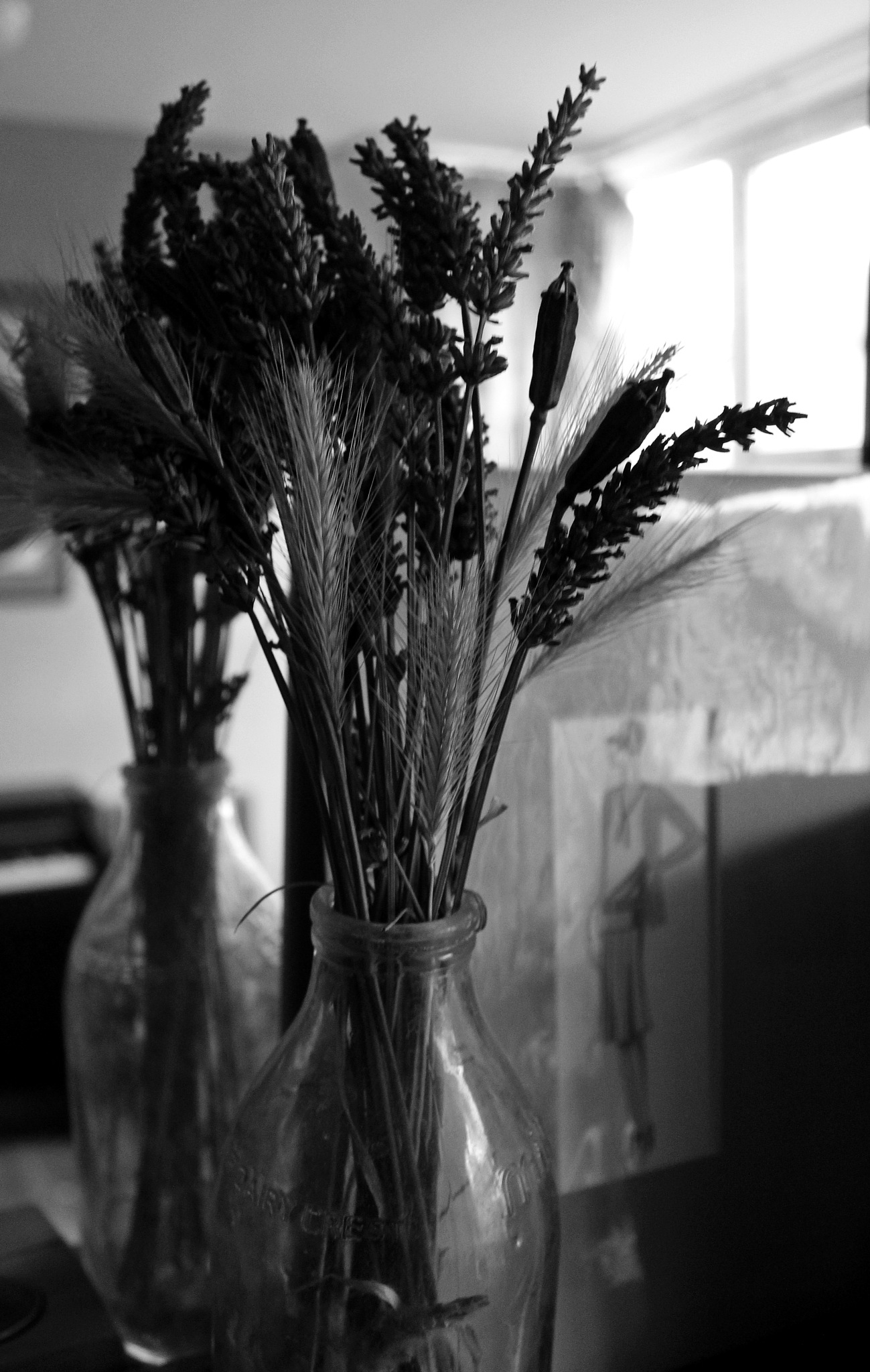 lavender and lady - b/w by Jane Rue