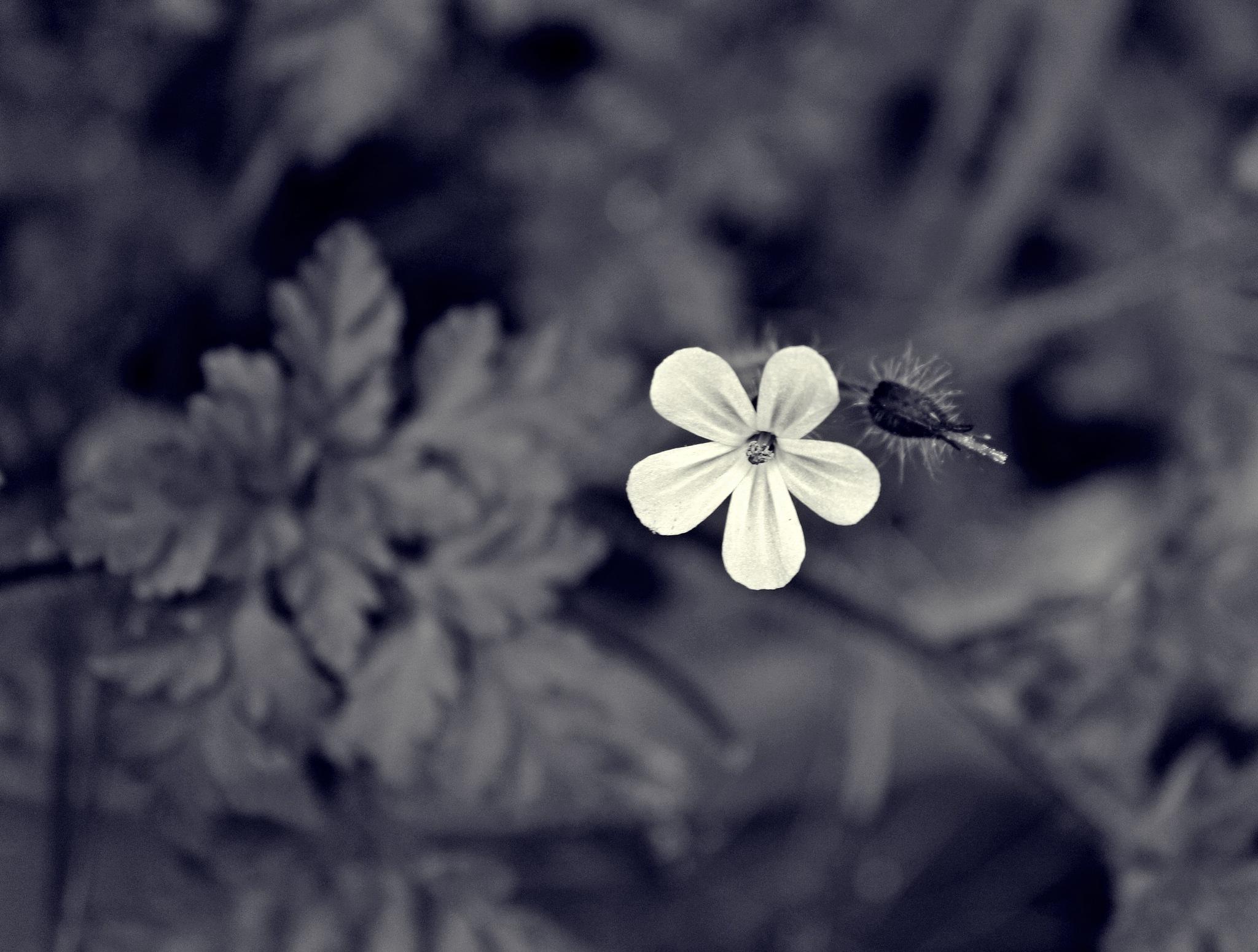 tiny flower by Jane Rue