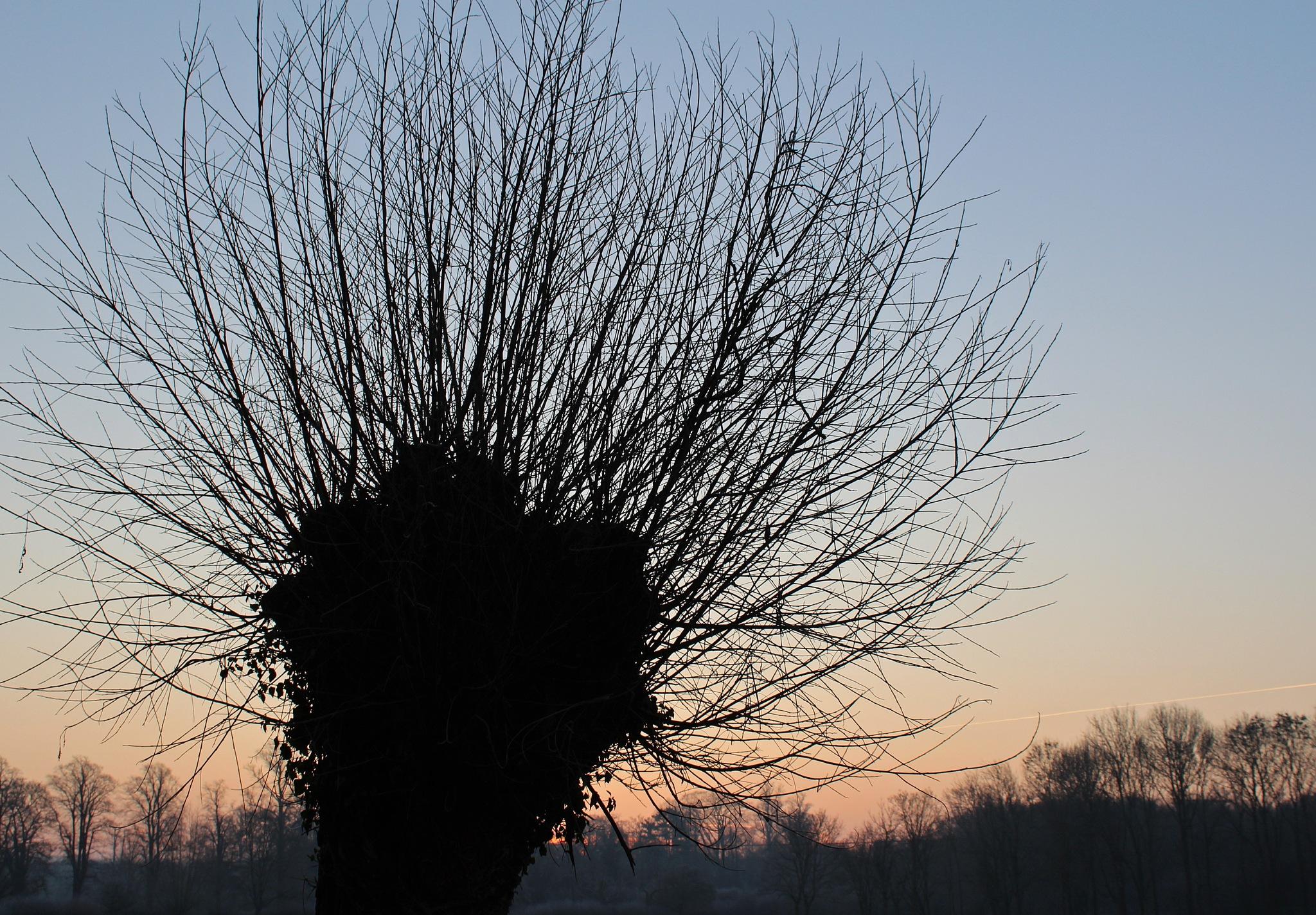 tree by Jane Rue