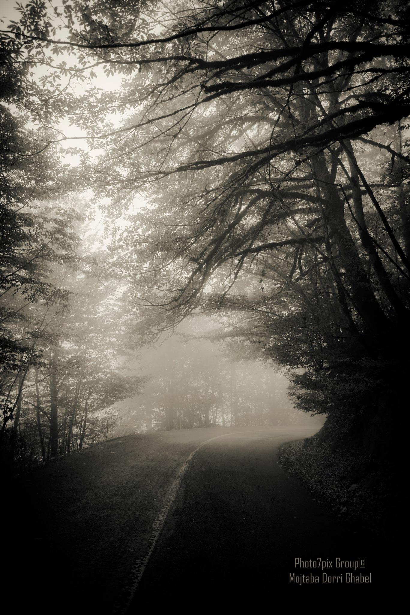 road by mojtabadorri