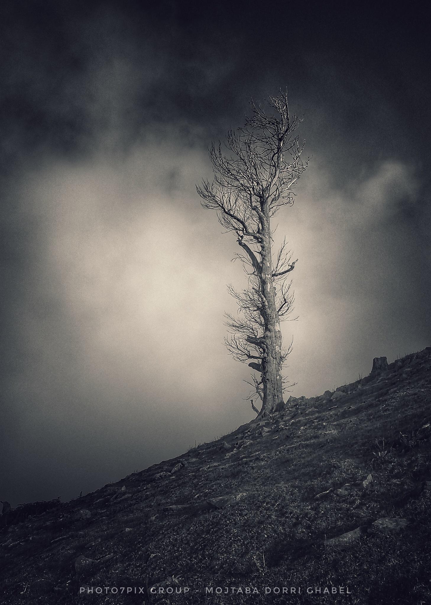 single tree by mojtabadorri