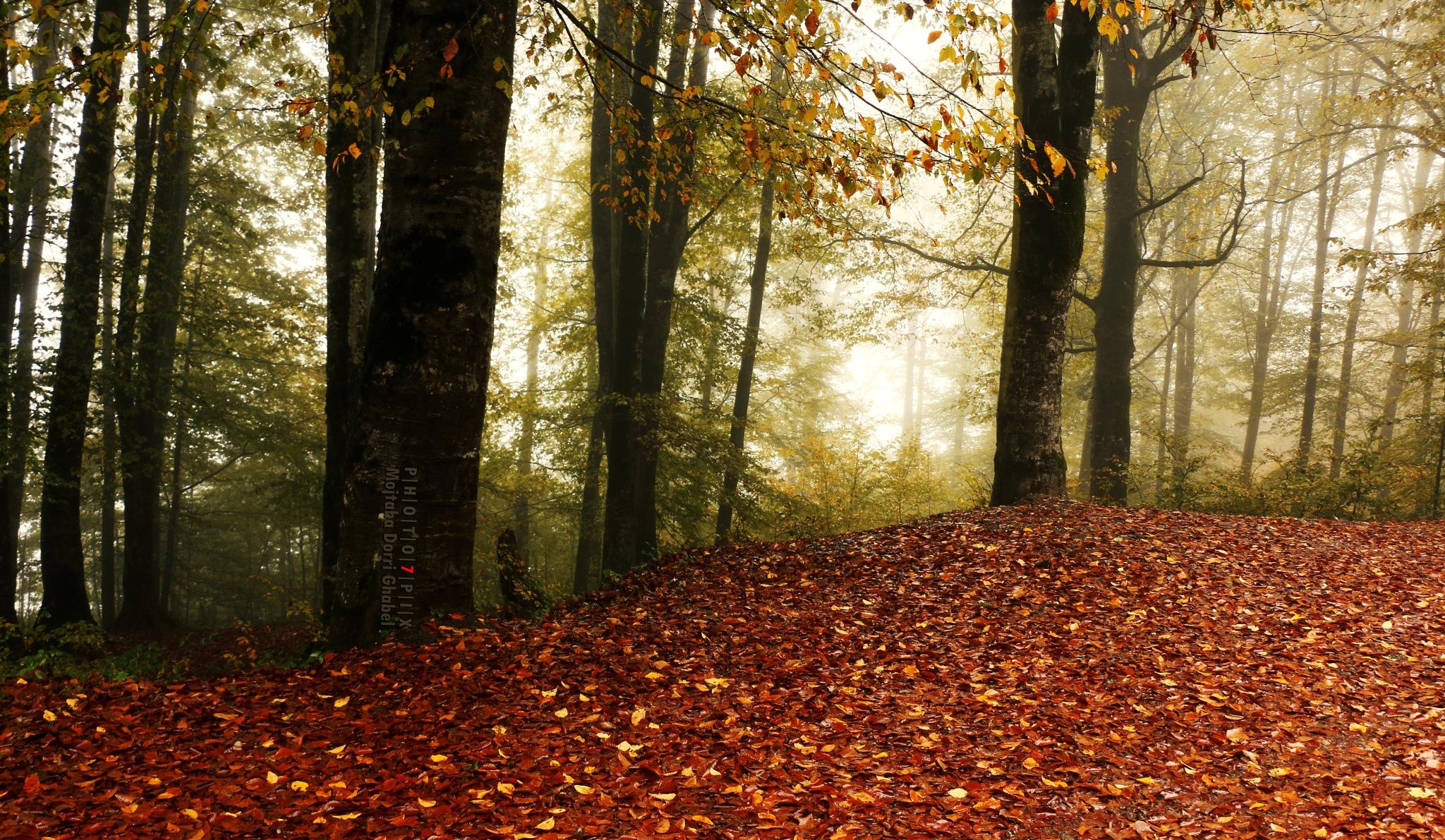 autumn colors by mojtabadorri